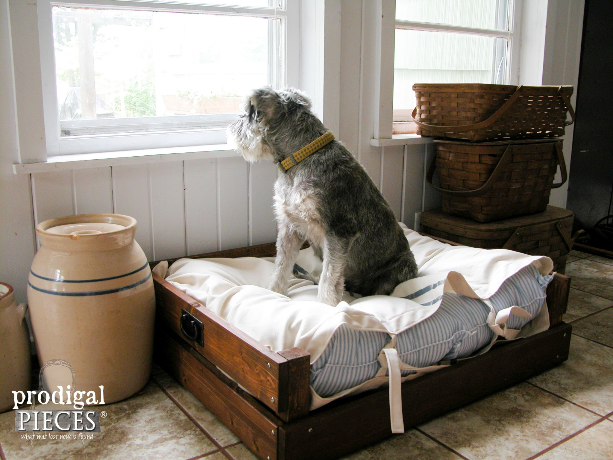 Miniature Schnauzer Sitting on DIY Pet Bed. Plans & Tutorial included by Prodigal Pieces | www.prodigalpieces.com