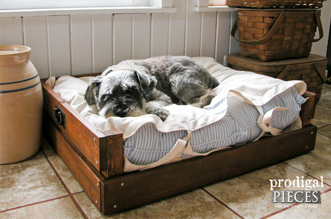 Featured DIY Pet Bed by Prodigal Pieces   www.prodigalpieces.com
