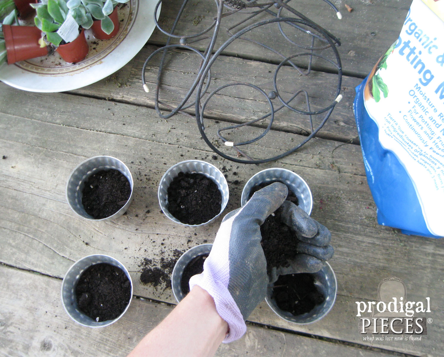 Filling Repurposed Jelly Molds with Succulents and Soil | Prodigal Pieces | www.prodigalpieces.com