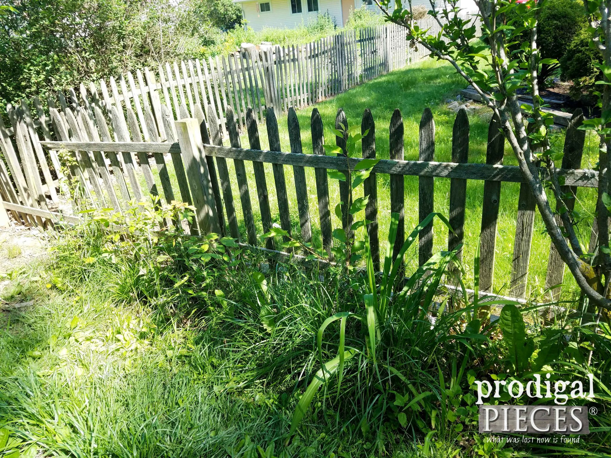 Backyard Fence Overgrowth | prodigalpieces.com