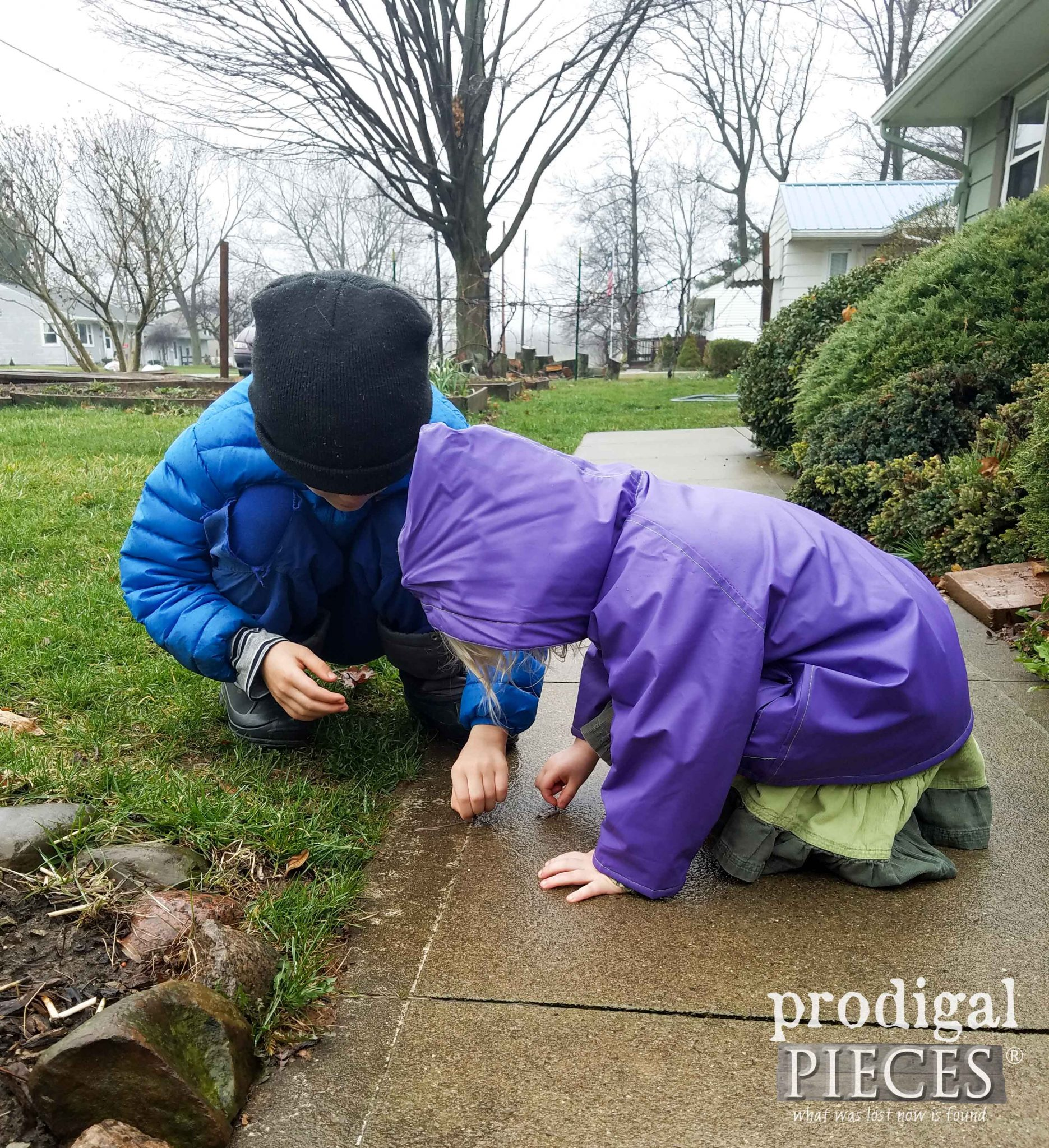Early Morning Worm Rescue ~ Homeschooling Rocks | prodigalpieces.com