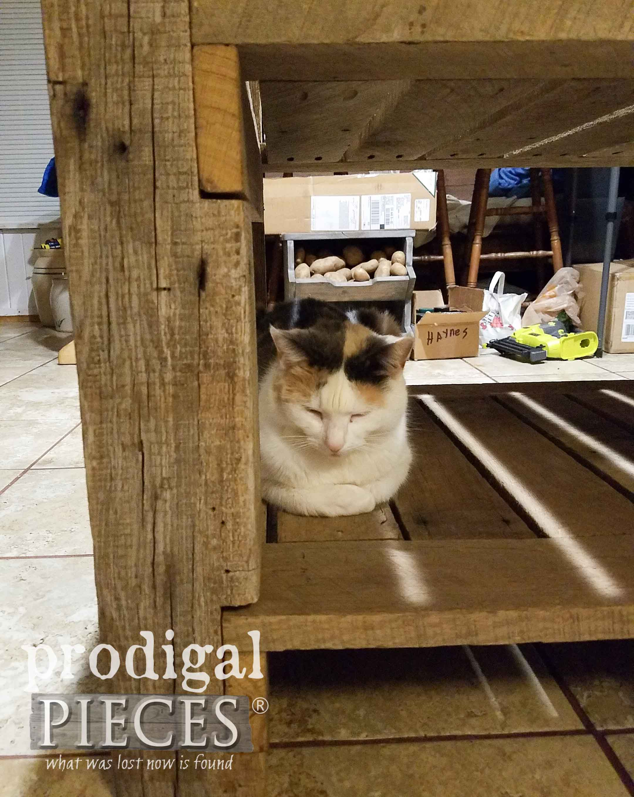 Cat on New Kitchen Build | prodigalpieces.com
