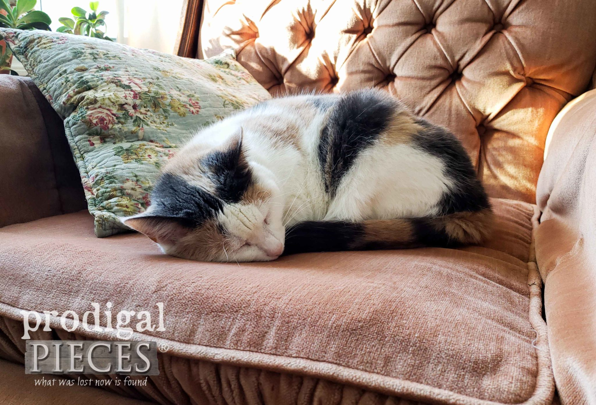 Calico Cat Sleeping on Chair | prodigalpieces.com #prodigalpieces #homeisthekey #home