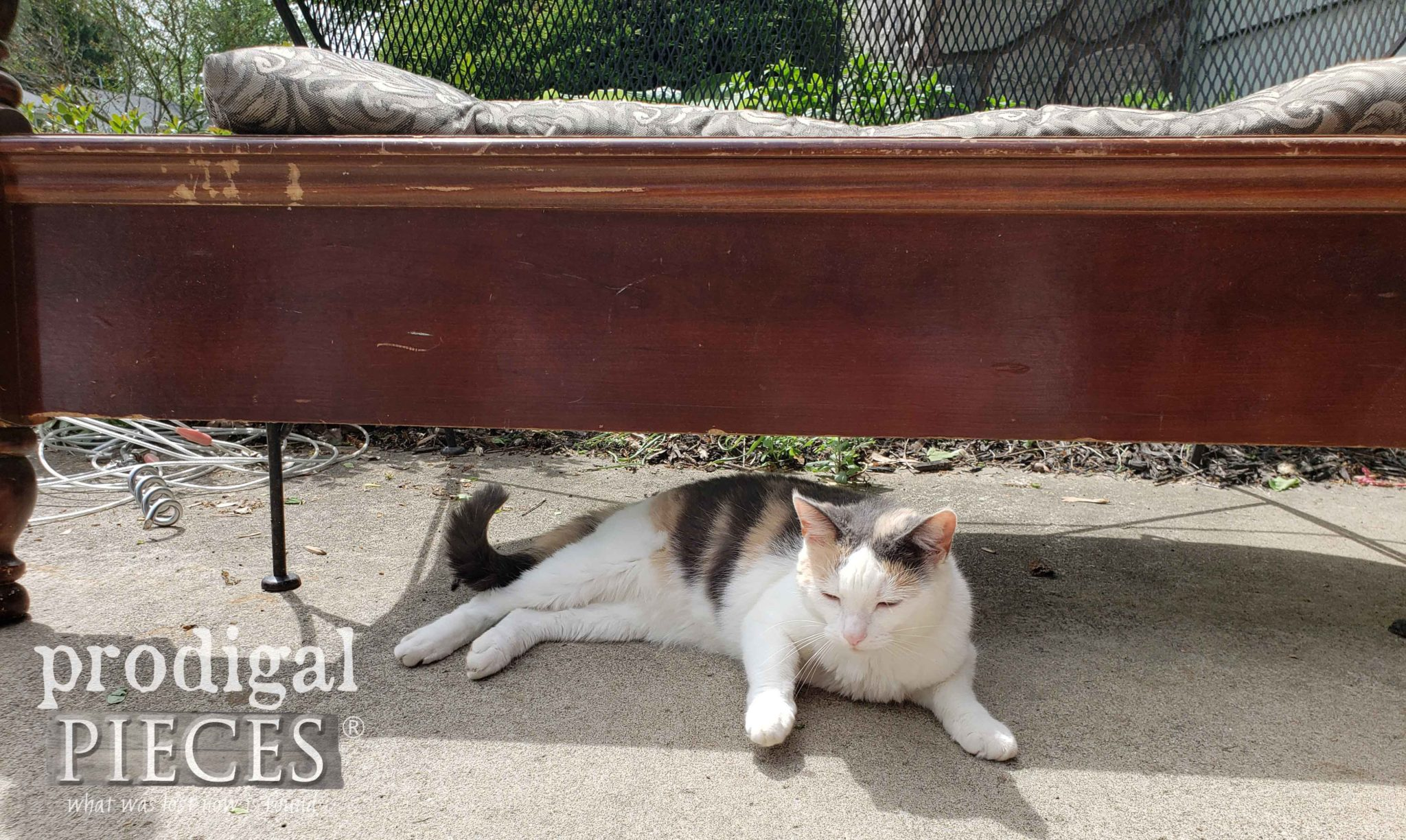 Calico Cat Laying Under Vintage Footboard | prodigalpieces.com