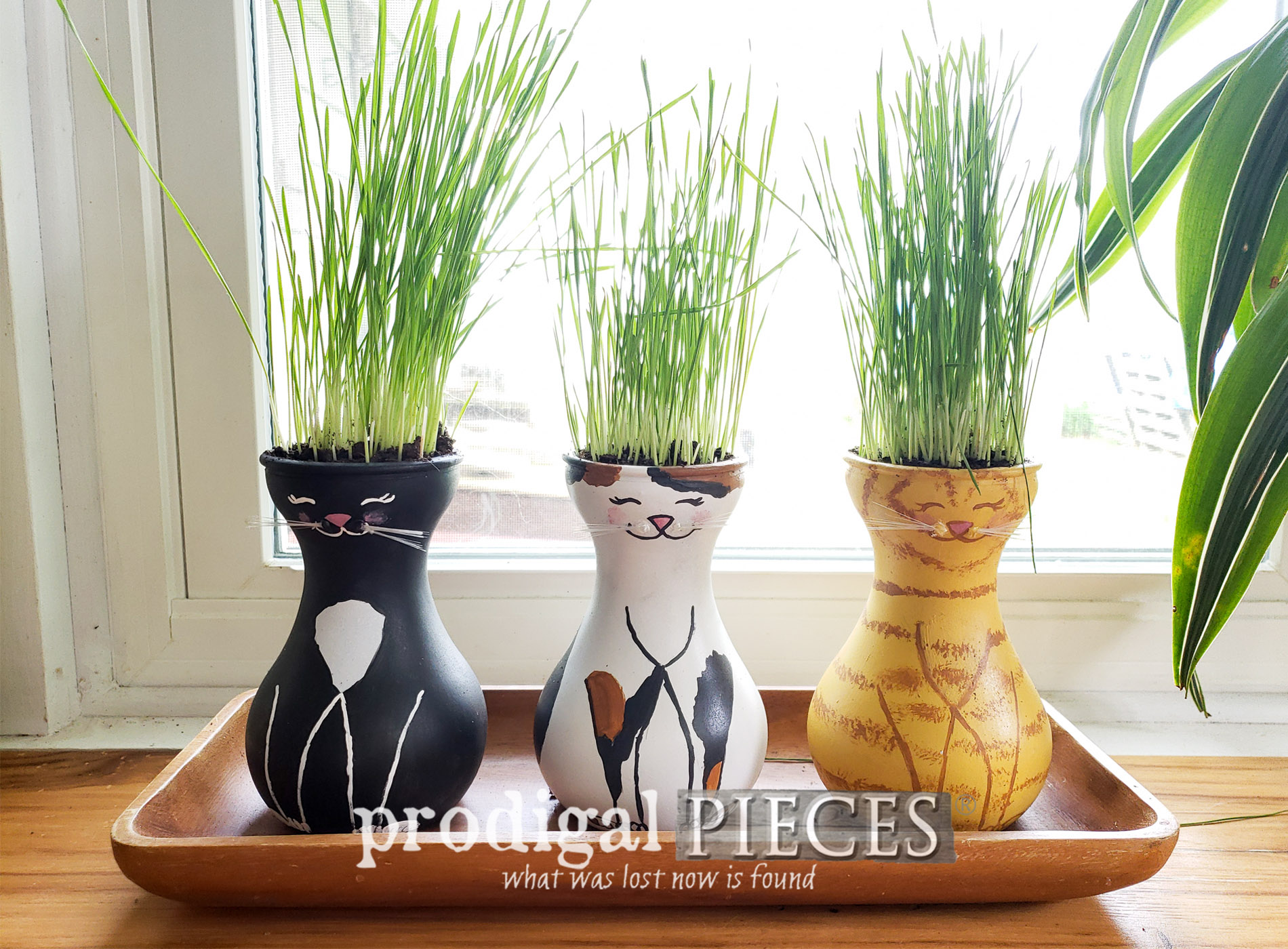 Featured DIY Cat Grass Tutorial for Cats, Dogs, & People Too | Video Tutorial at Prodigal Pieces | prodigalpieces.com #prodigalpieces #diy #home #handmade #pets #cats #dogs #pethealth