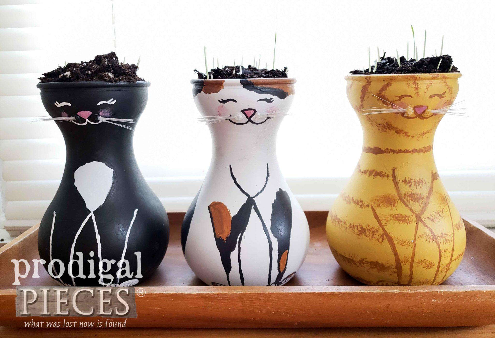 Five Day Cat Grass Growth | DIY Tutorial by Larissa of Prodigal Pieces | prodigalpieces.com #prodigalpieces #diy #home #homedecor #pets #health #food #gardening