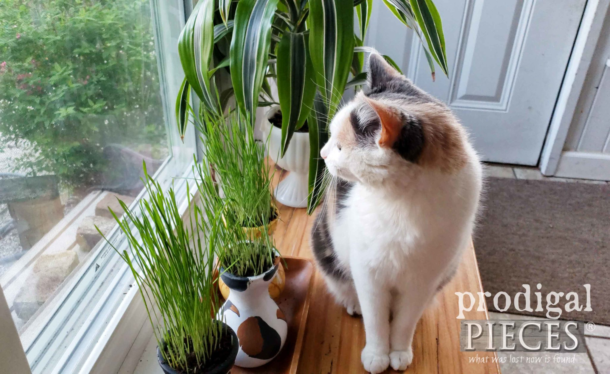Indoor Cat Grass Tutorial with Video DIY by Larissa of Prodigal Pieces | prodigalpieces.com #prodigalpieces #diy #home #pets #cats #food #homedecor