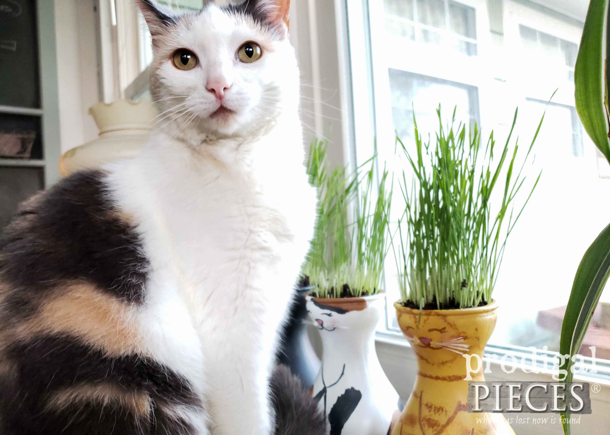 Happy Calico with Cat Grass Planter by Larissa of Prodigal Pieces | prodigalpieces.com #prodigalpieces #pets #cats #food