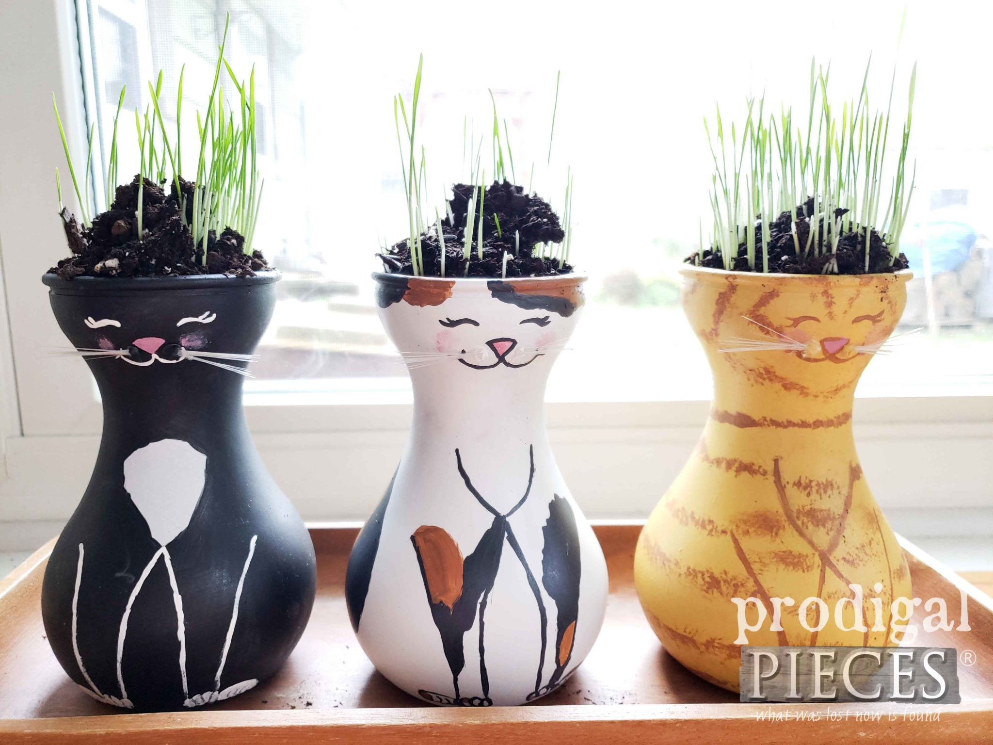 Seven Day Cat Grass Growth by Larissa of Prodigal Pieces | prodigalpieces.com #diy #home #gardening #cats #pets #health #food