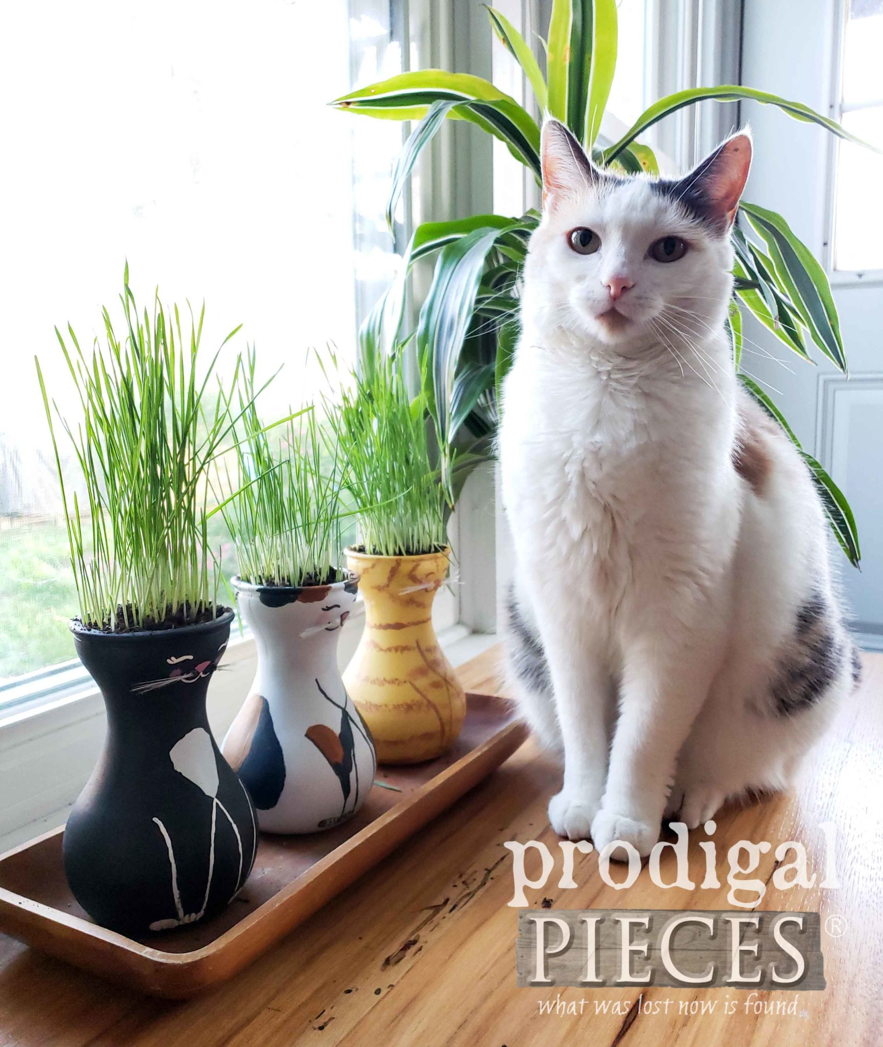 Pretty Calico Cat with Cat Grass Vases | Video Tutorial by Larissa of Prodigal Pieces | prodigalpieces.com #prodigalpieces #diy #home #pets #gardening #homedecor #cats