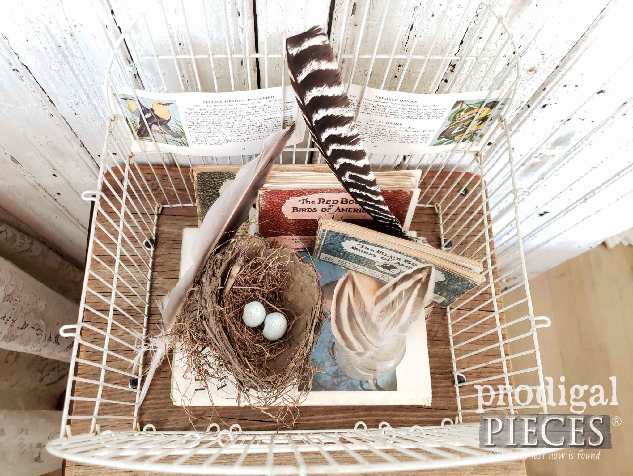 Birding Vignette for Farmhouse Decor by Larissa of Prodigal Pieces | prodigalpieces.com #prodigalpieces #farmhouse #birds #home #homedecor #diy