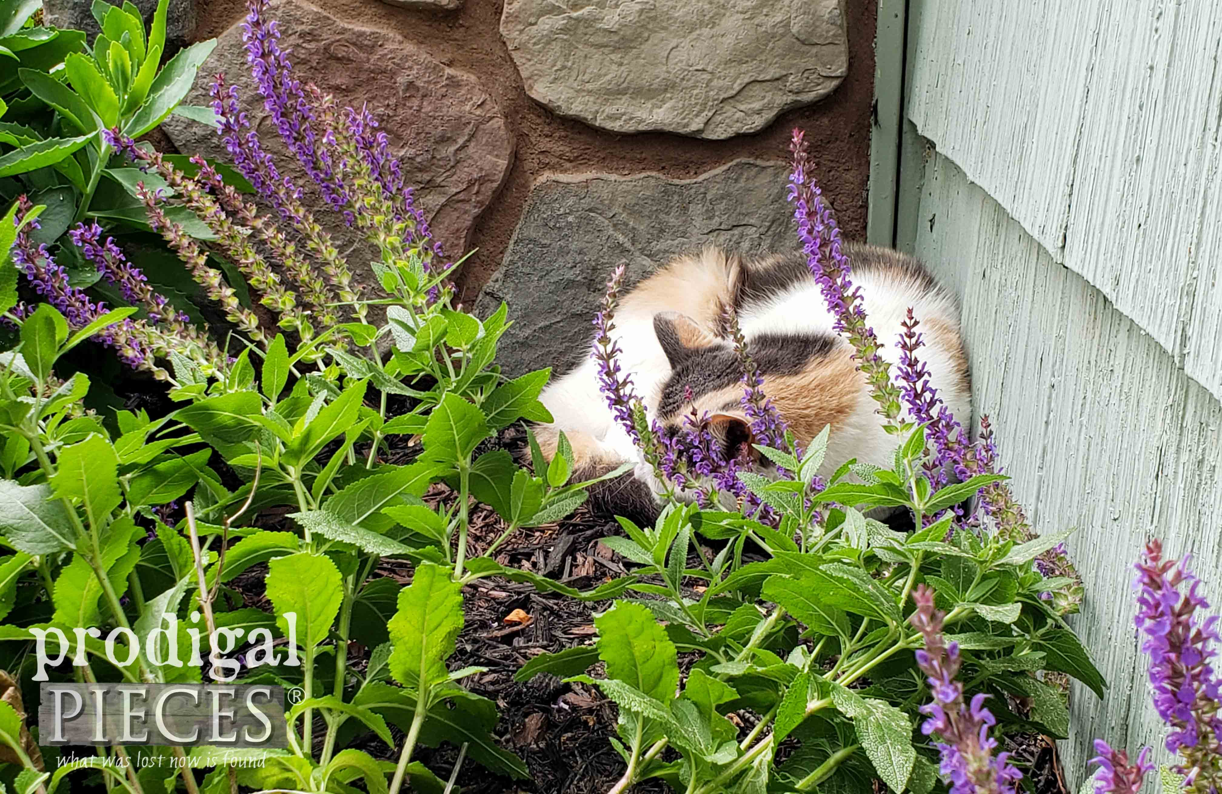 Calico Cat Napping in Garden | prodigalpieces.com #prodigalpieces #cats