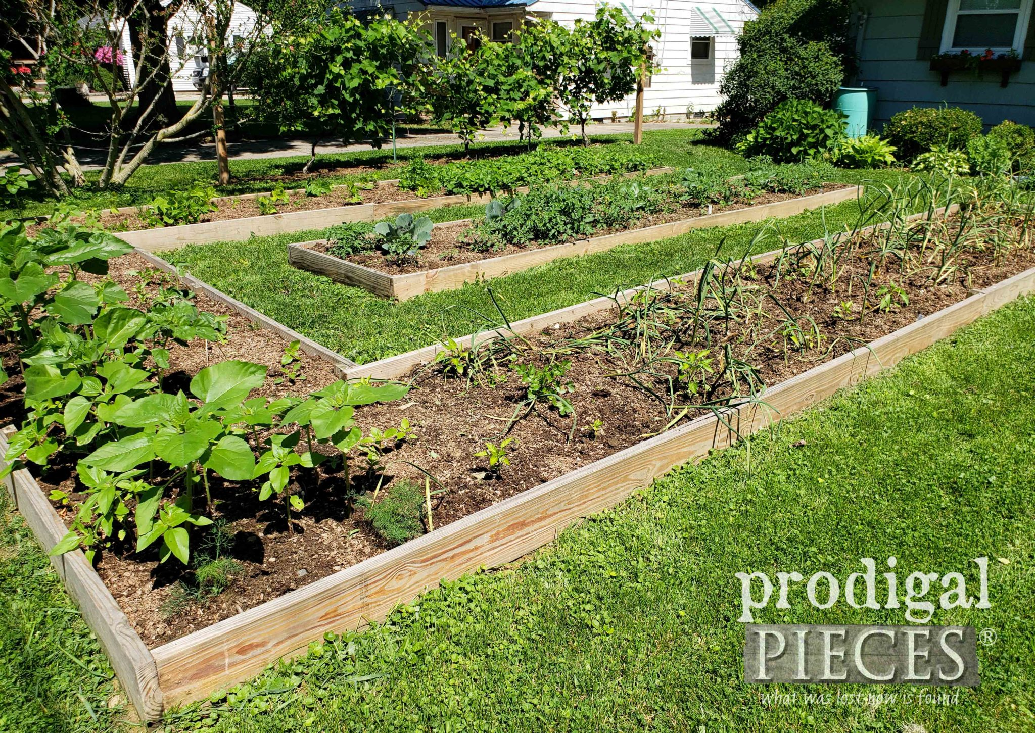 City Lot with DIY Raised Bed Gardens | Video Tour at prodigalpieces.com #prodigalpieces #diy #garden #food