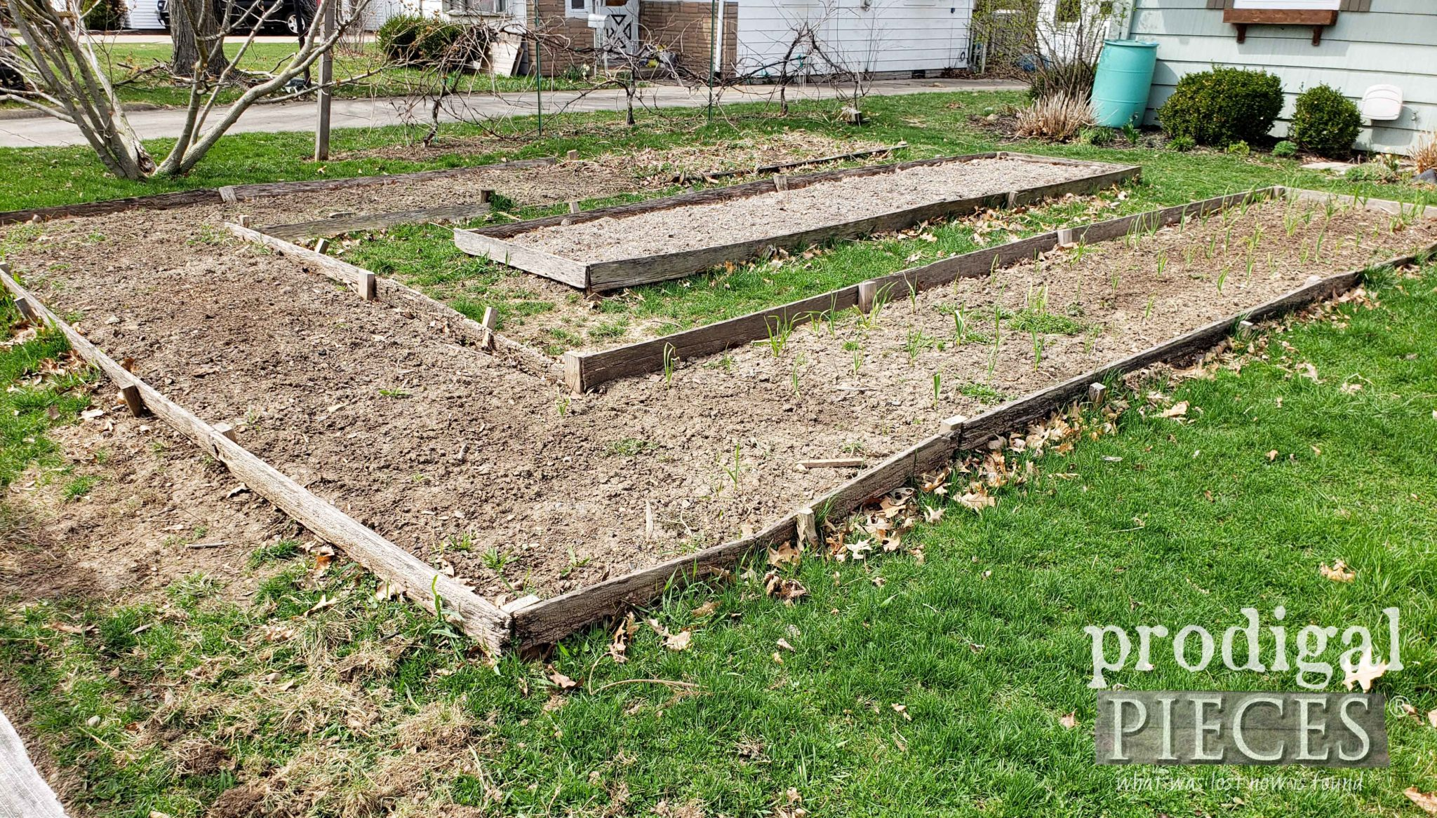 DIY Raised Garden Beds Before Rebuilding | prodigalpieces.com