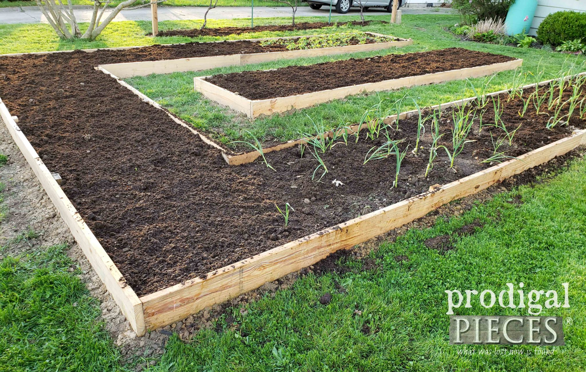 DIY Raised Garden Bed with Composted Manure | Video Tour at prodigalpieces.com #prodigalpieces #home #garden