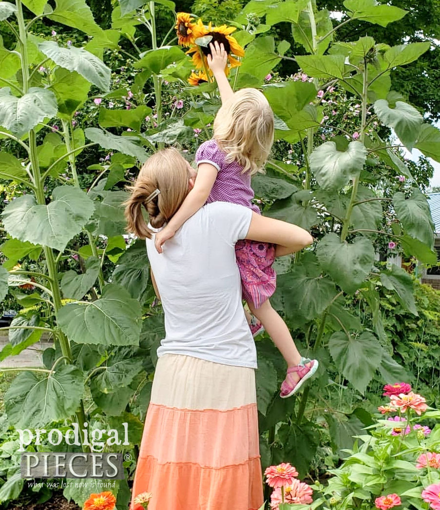 Sunflowers in Raised Garden Bed | Larissa of Prodigal Pieces and daughter | prodigalpieces.com #prodigalpieces #diy #garden