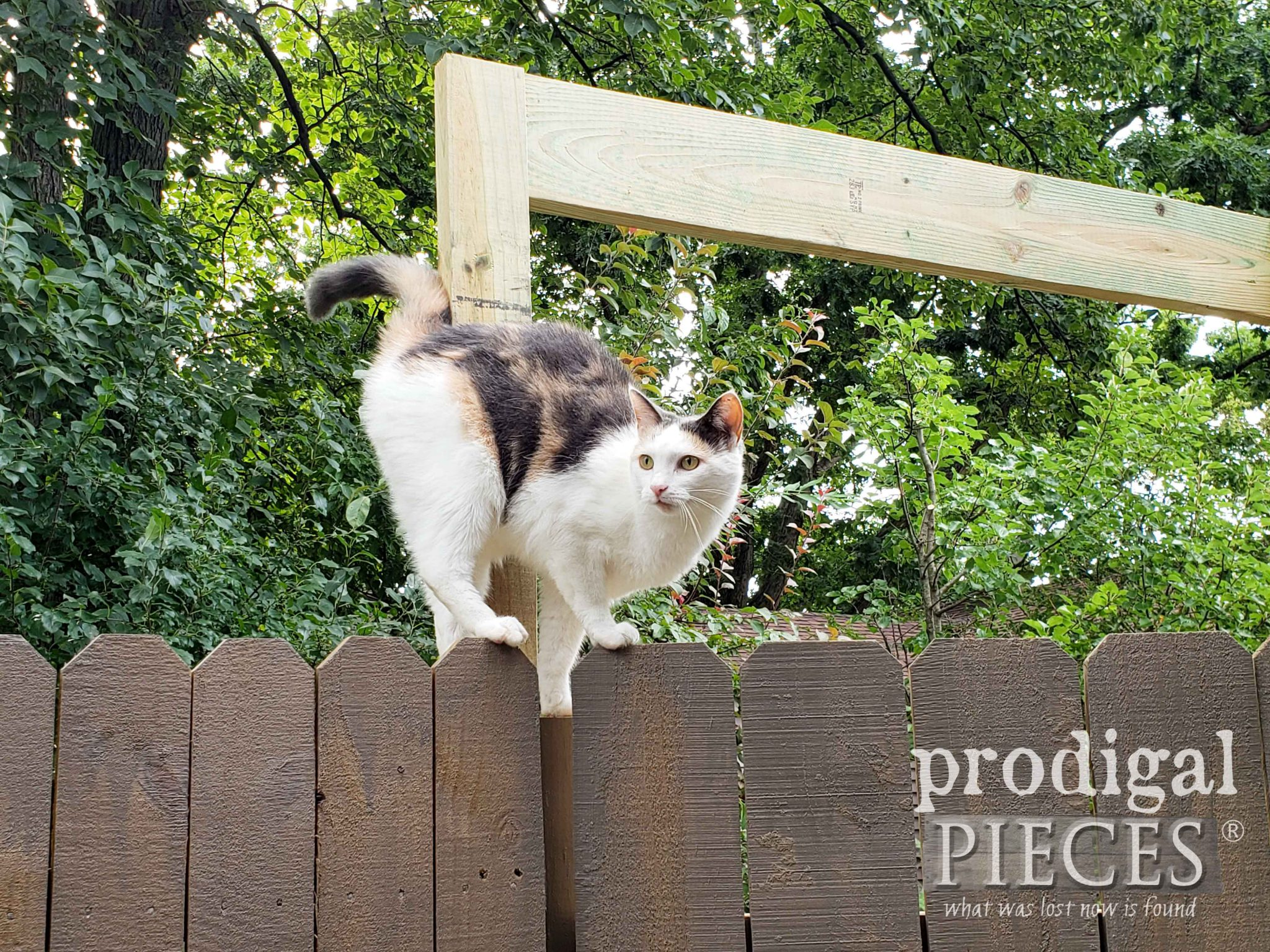 Calico Cat on Fence | prodigalpieces.com