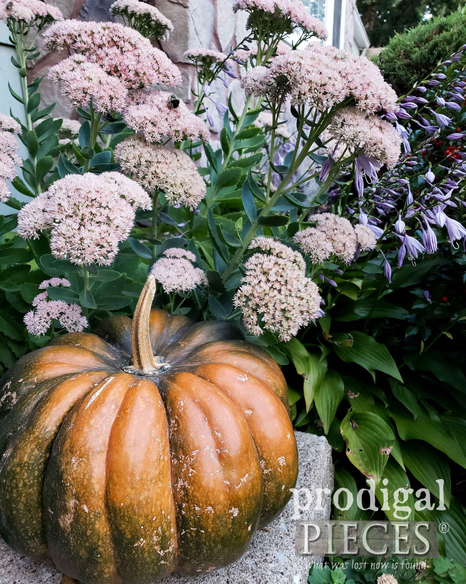 Harvest Pumpkin and Autumn Joy in Garden by Larissa of Prodigal Pieces   prodigalpieces.com #prodigalpieces