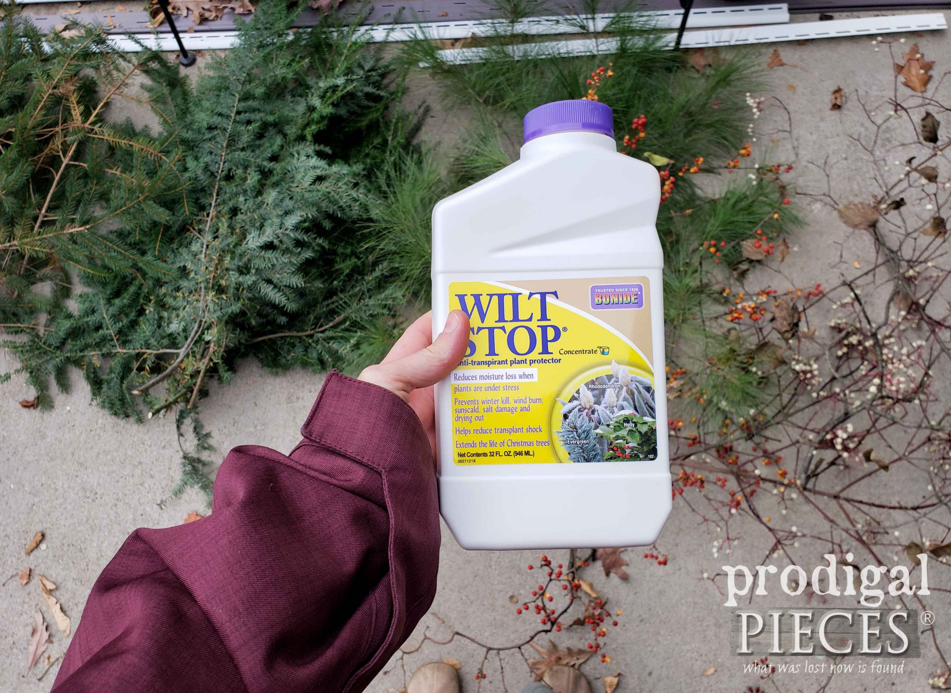 Use Wilt Stop to Treat your Fresh Foraged Cuts and Christmas Tree for Longevity | prodigalpieces.com