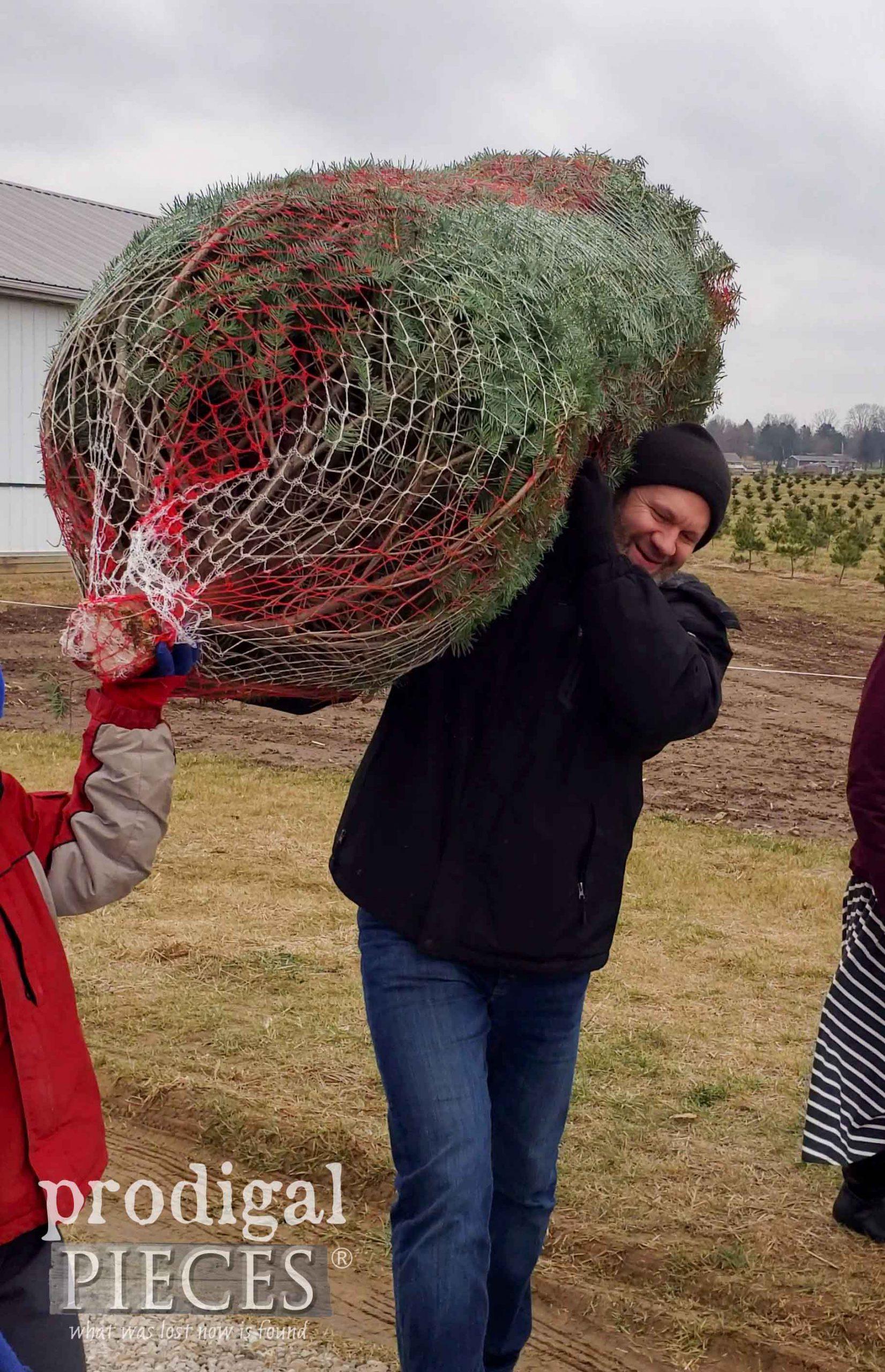 Carrying Fresh Christmas Tree | prodigalpieces.com #prodigalpieces