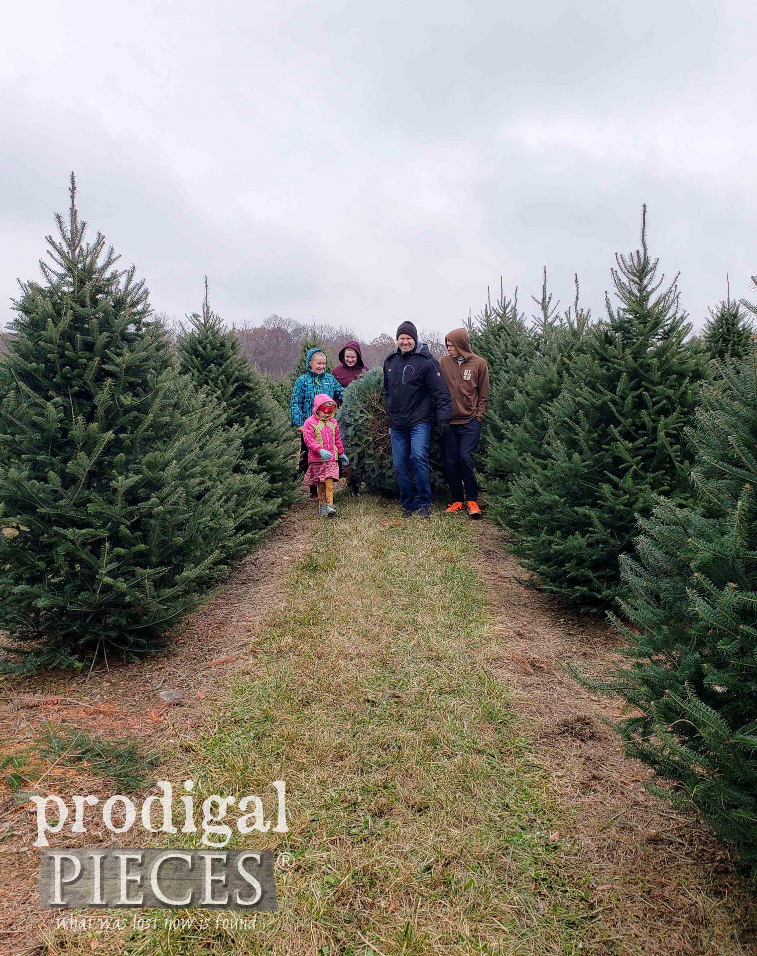 Fresh Christmas Tree Retrieval | prodigalpieces.com
