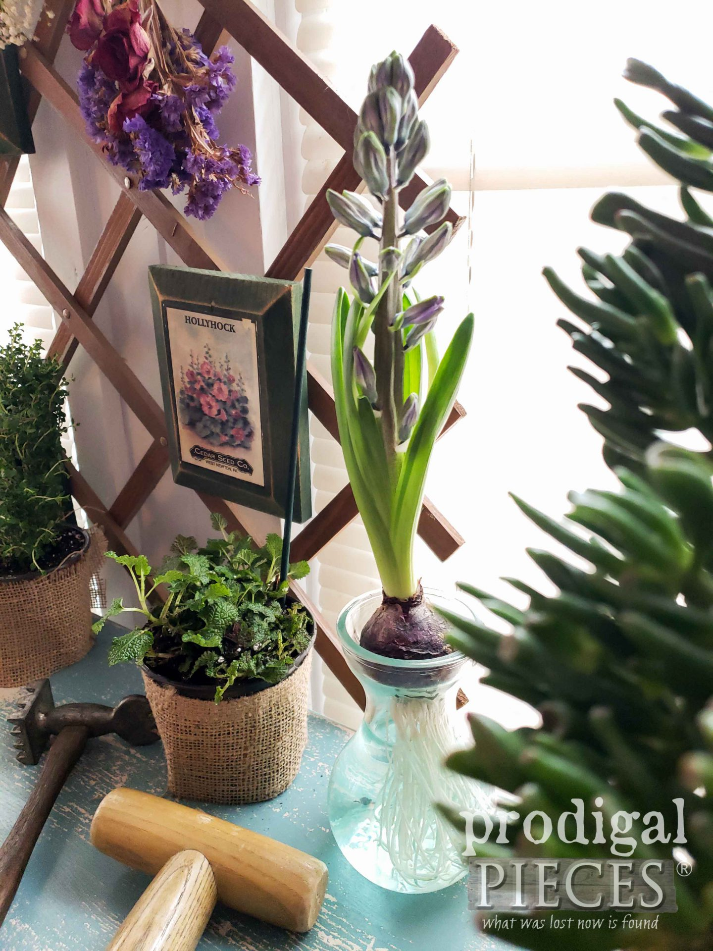 Blue Hyacinth Flower in Farmhouse Decor by Larissa of Prodigal Pieces | prodigalpieces.com #prodigalpieces #flowers #garden #hyacinth #farmhouse #home #homedecor