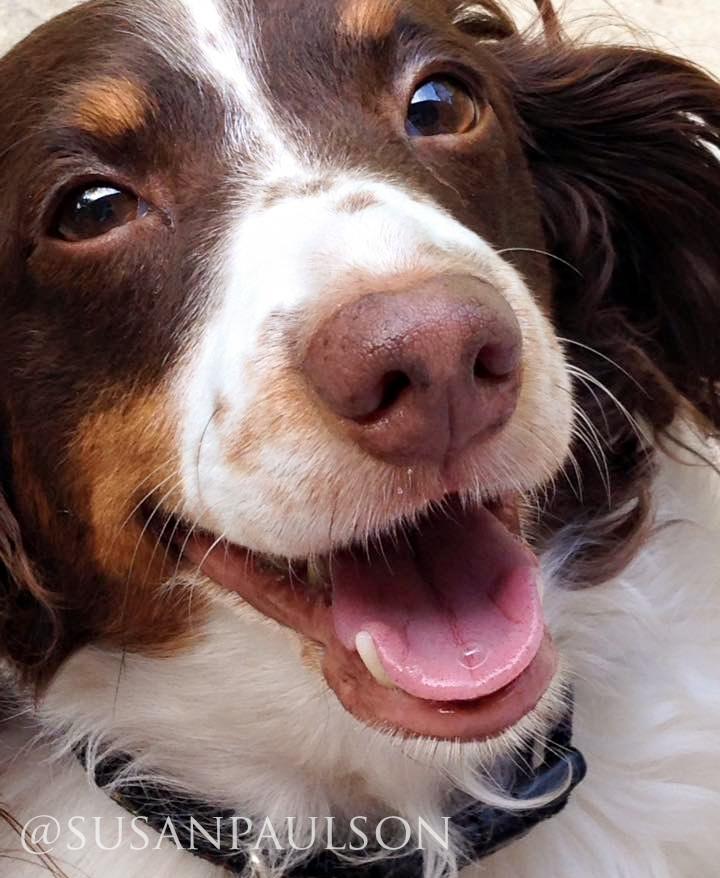 Smiling Dog Face | prodigalpieces.com
