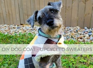 DIY Dog Coat Tutorial from Upcycled Sweaters by Larissa of Prodigal Pieces | prodigalpieces.com #prodigalpieces #diy #sewing #dog #pets