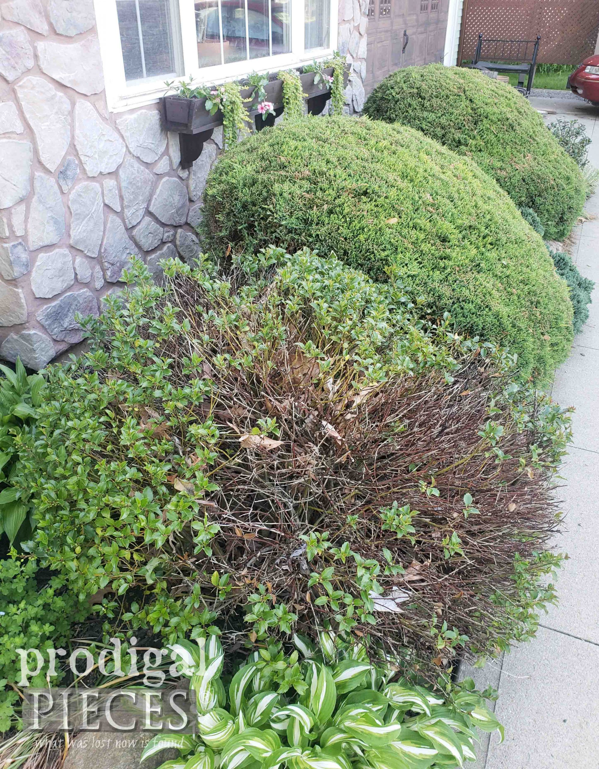 Bushes Before | prodigalpieces.com