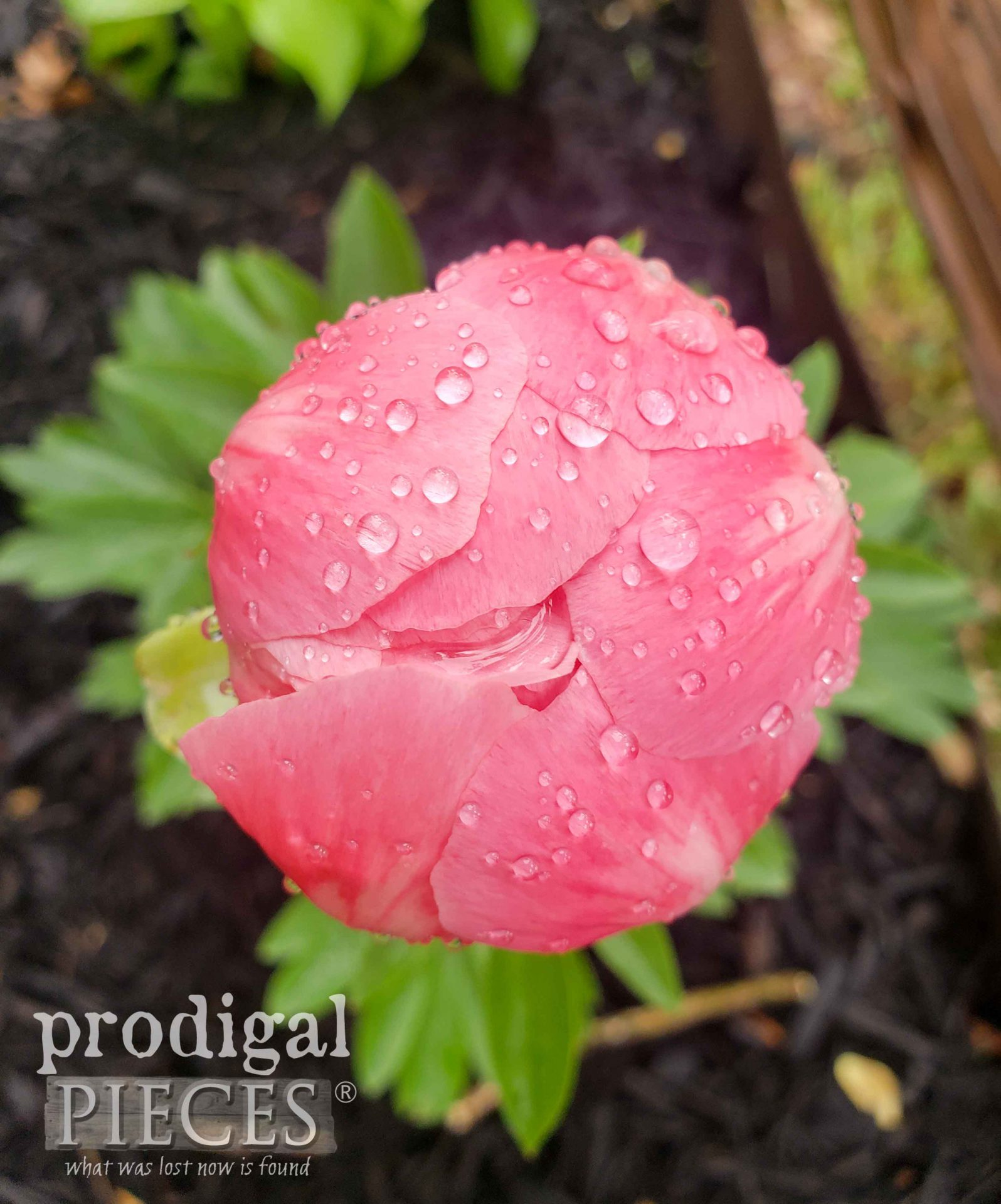 Closed Pink Peony Bud by Larissa of Prodigal Pieces | prodigalpieces.com