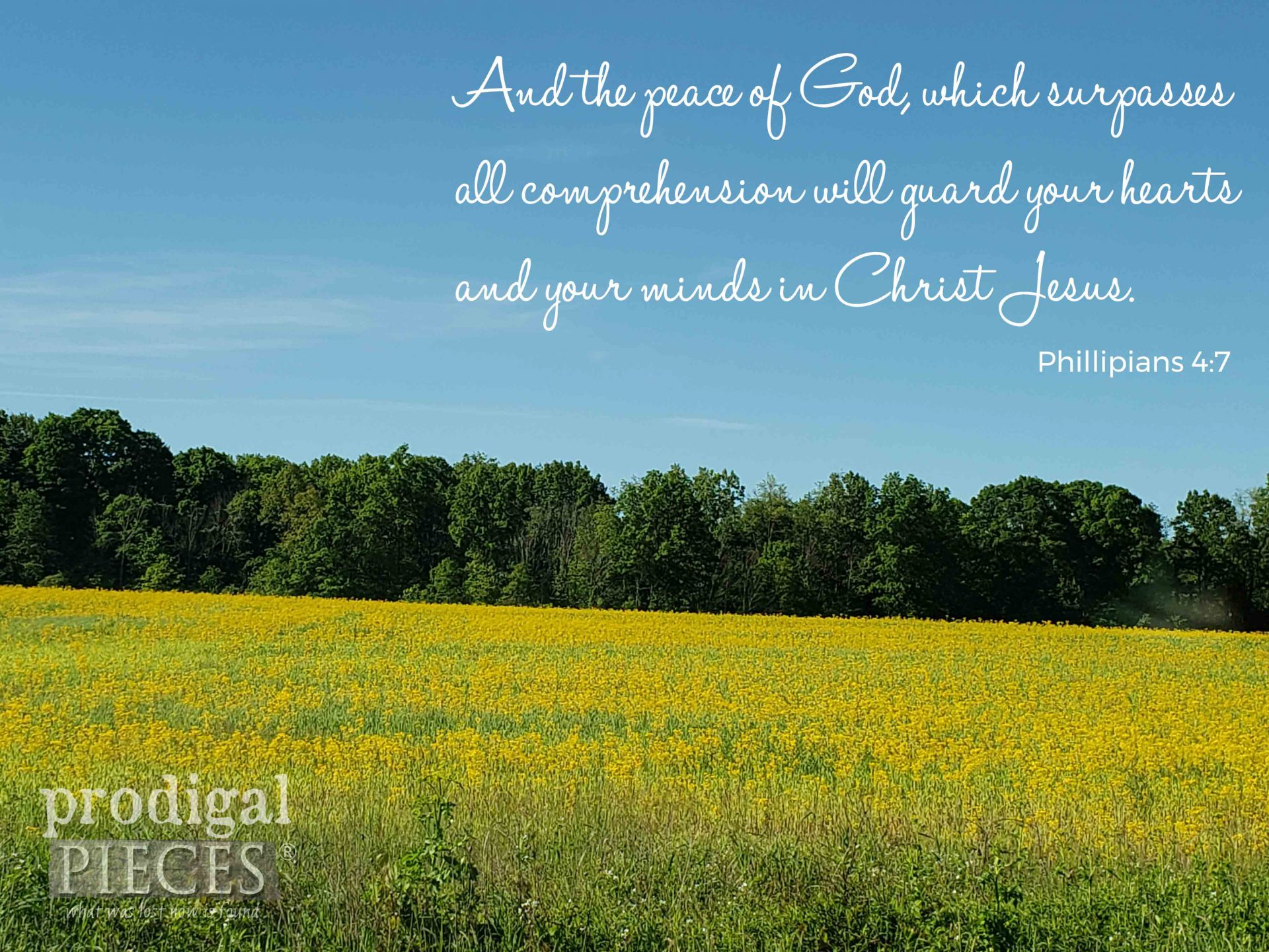 Philippians 4:7 Scripture and Nature by Prodigal Pieces | prodigalpieces.com #prodigalpieces.com
