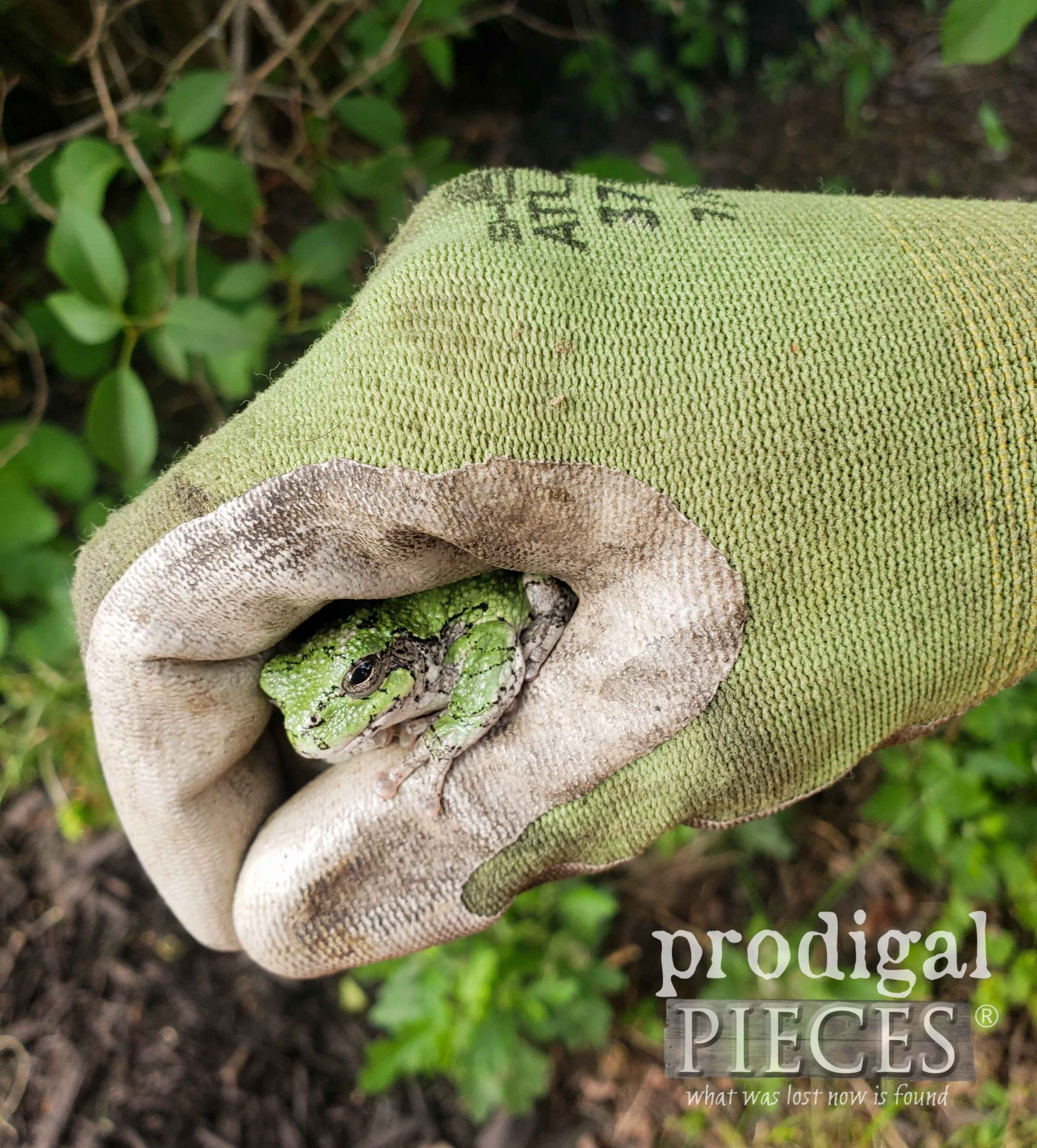 Spring Peeper in Prodigal Pieces Garden | prodigalpieces.com