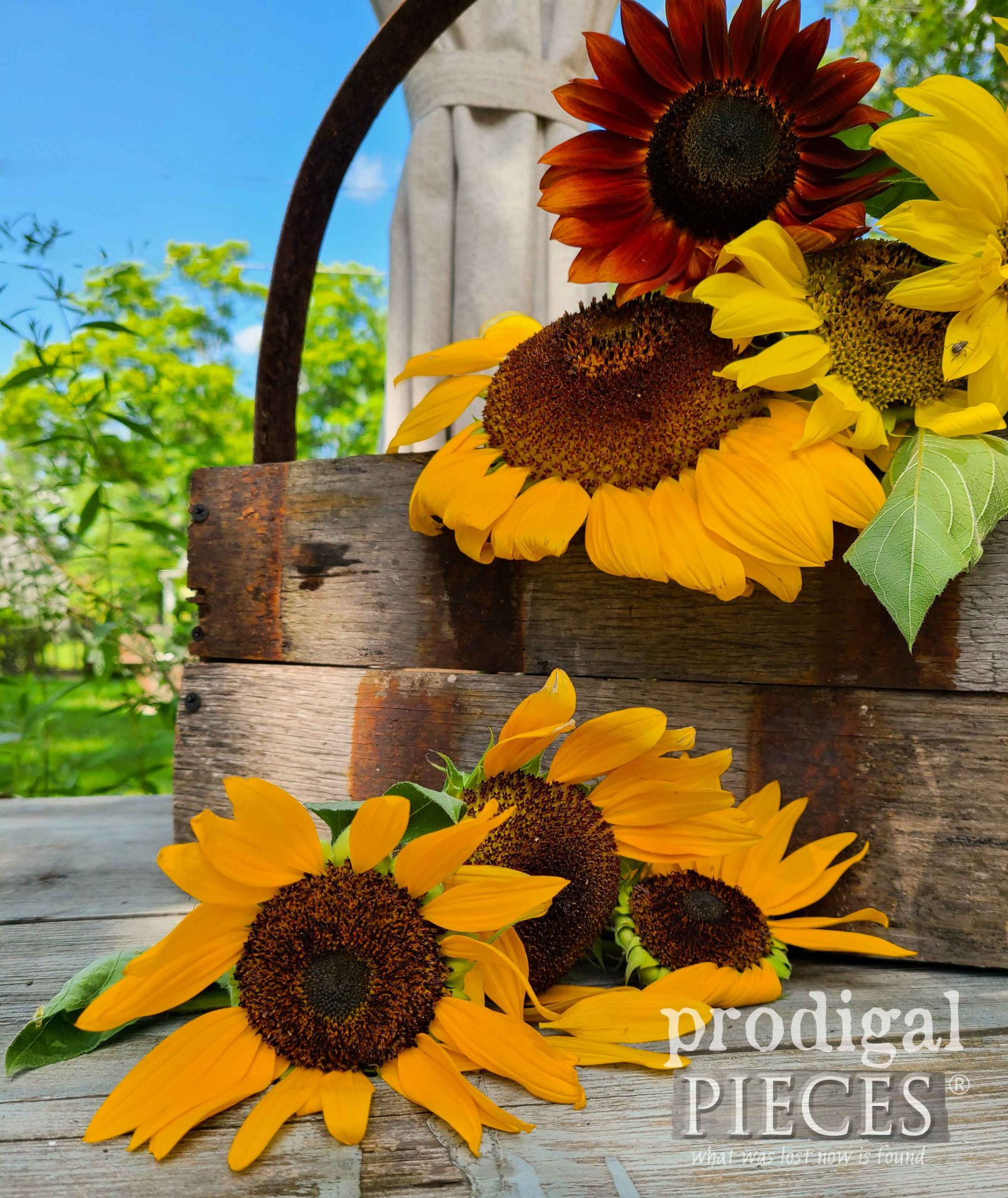 Homegrown sunflowers by Larissa of Prodigal Pieces | prodigalpieces.com #prodigalpieces #sunflowers #garden #home