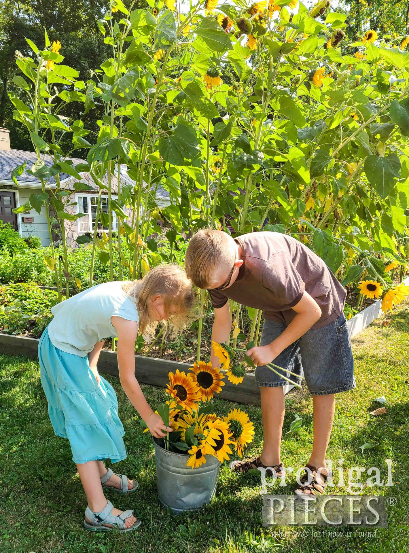 Picking Sunflowers to Share by Prodigal Pieces | prodigalpieces.com #prodigalpieces #sunflowers #gardening