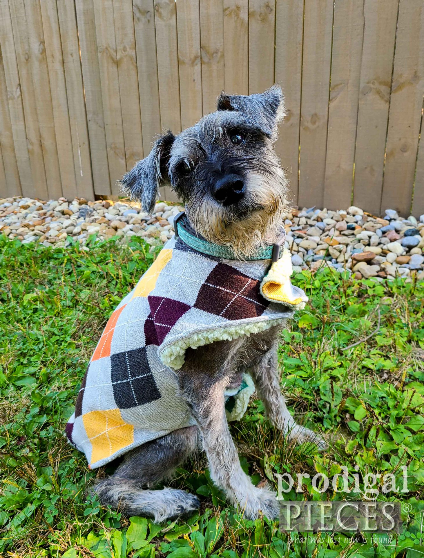 Argyle DIY Dog Coat from Upcycled Sweaters by Larissa of Prodigal Pieces | prodigalpieces.com #prodigalpieces #pets #diy #handmade #dog