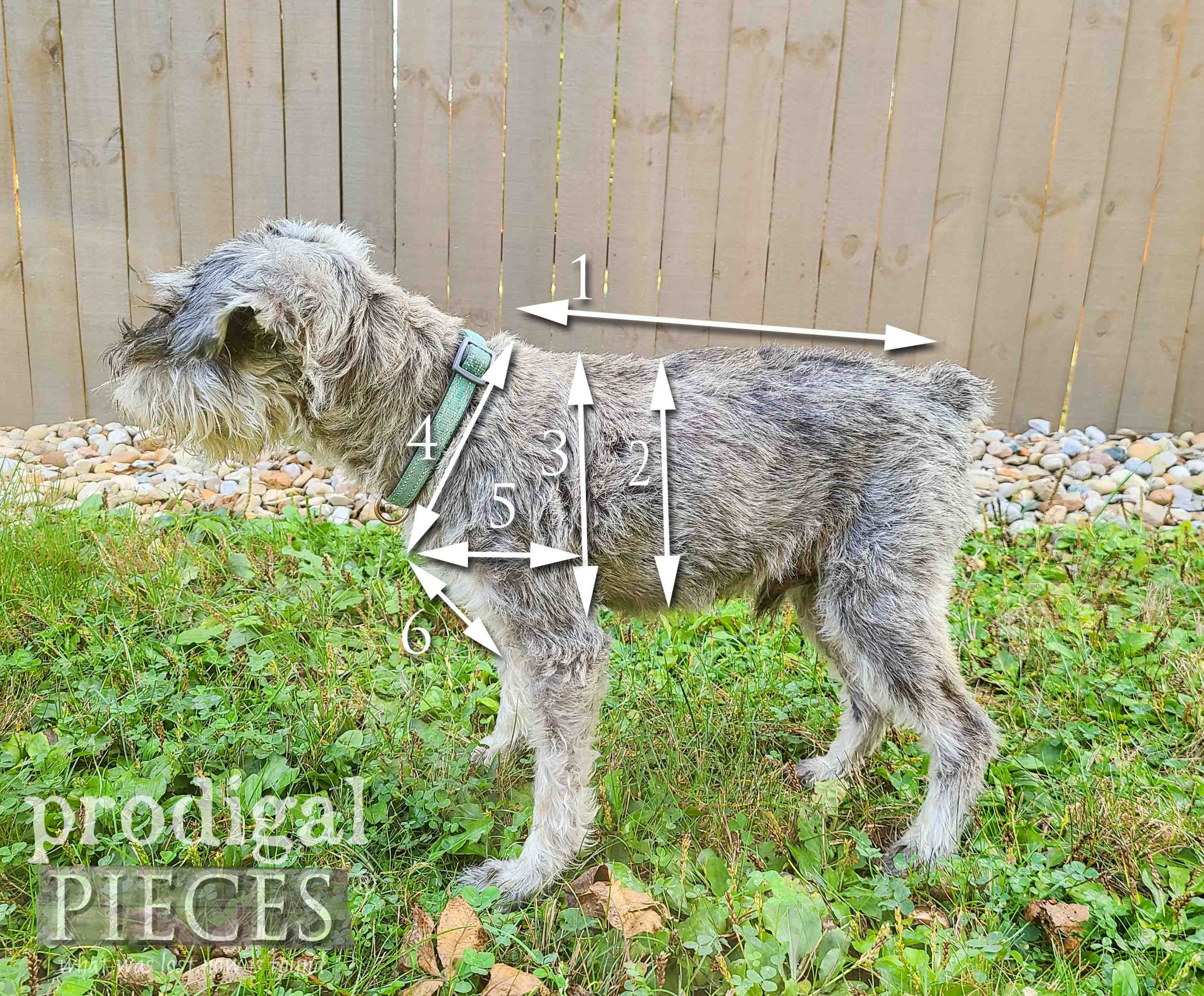 DIY Dog Coat Measurements from Upcycled Sweaters | prodigalpieces.com #prodigalpieces
