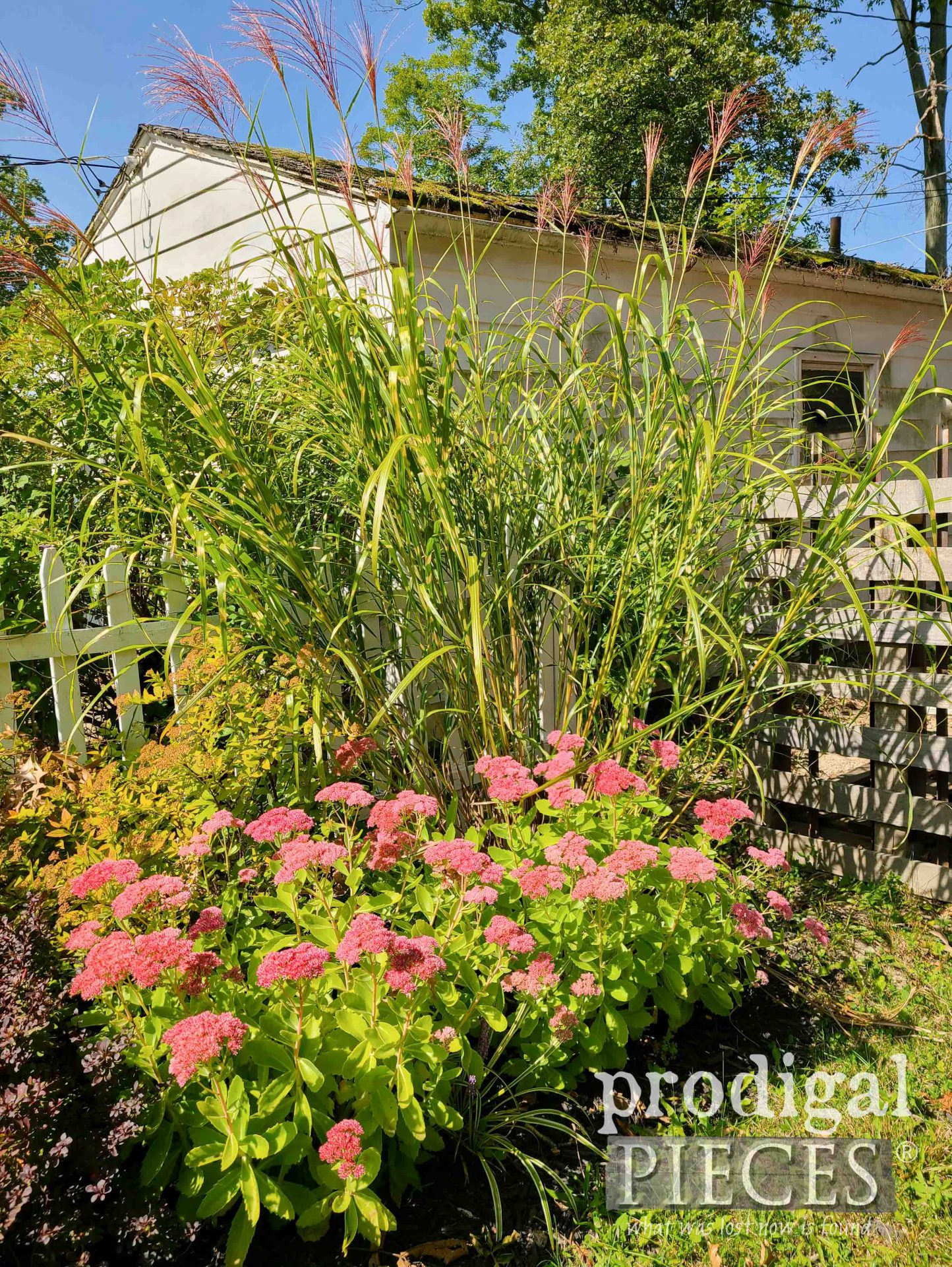Fall Foliage Landscaping with Autumn Joy and Zebra Grass by Prodigal Pieces | prodigalpieces.com