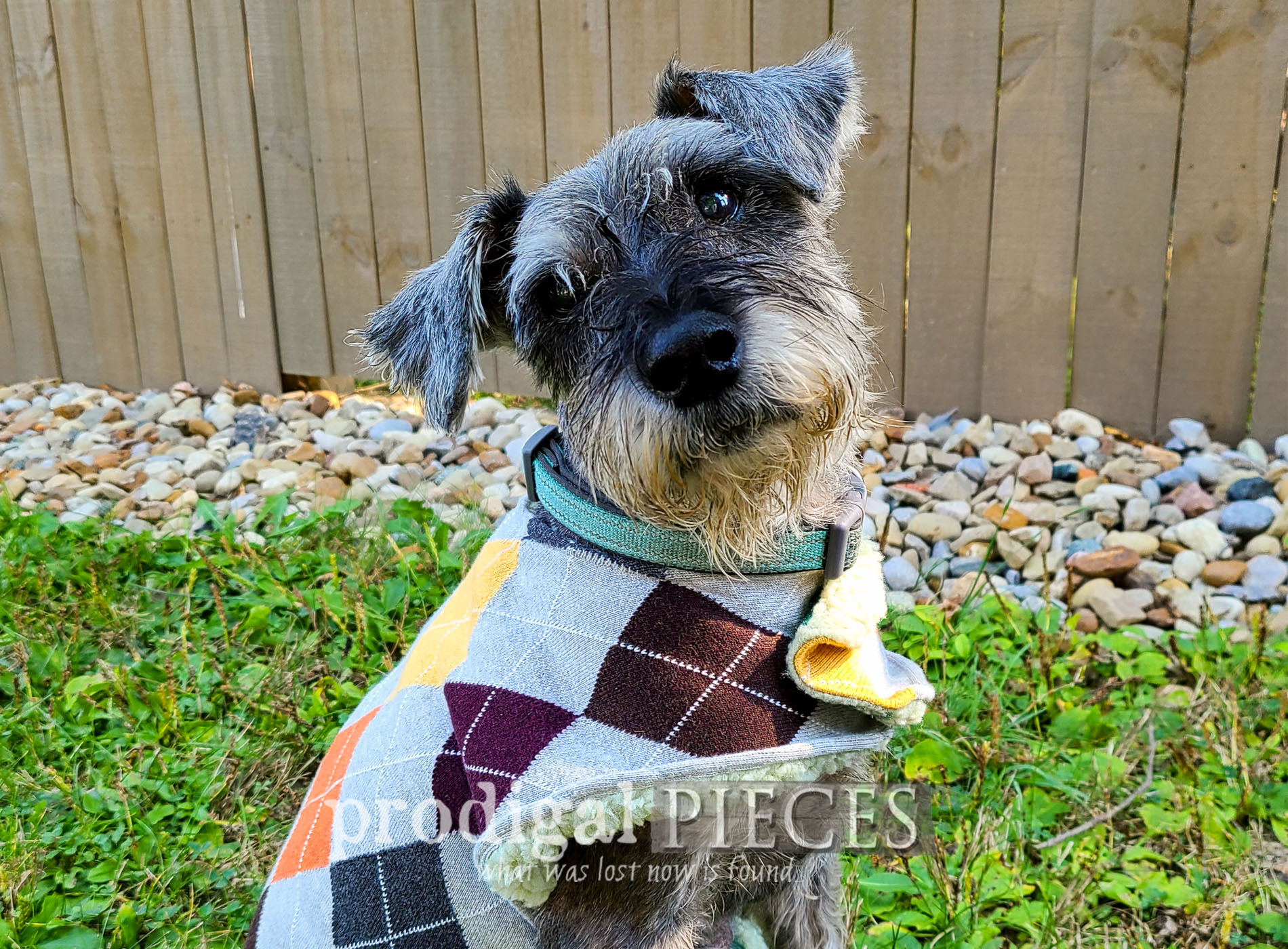Featured DIY Dog Coat from Upcycled Sweaters by Larissa of Prodigal Pieces | prodigalpieces.com #prodigalpieces #diy #pets #dogs #handmade #sewing