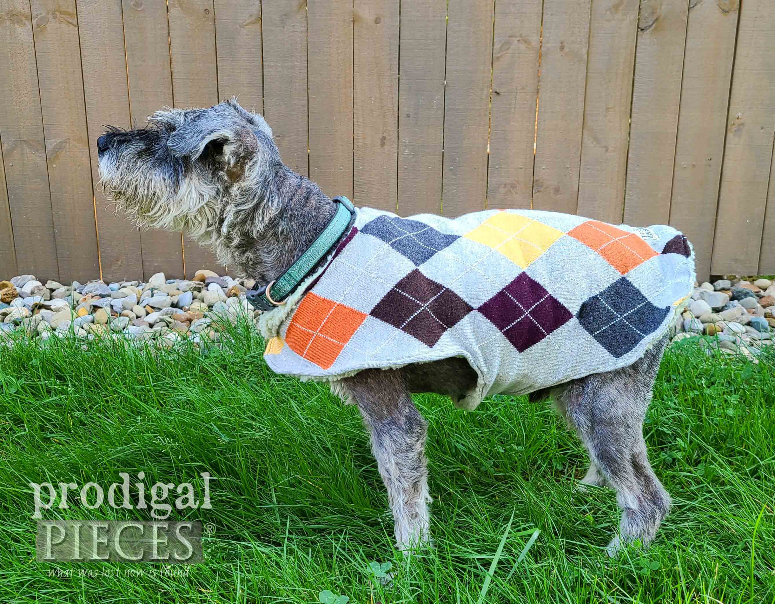 Handmade Dog Coat from Argyle Sweater by Larissa of Prodigal Pieces | prodigalpieces.com #prodigalpieces #diy #pets #dogs #handmade #diy