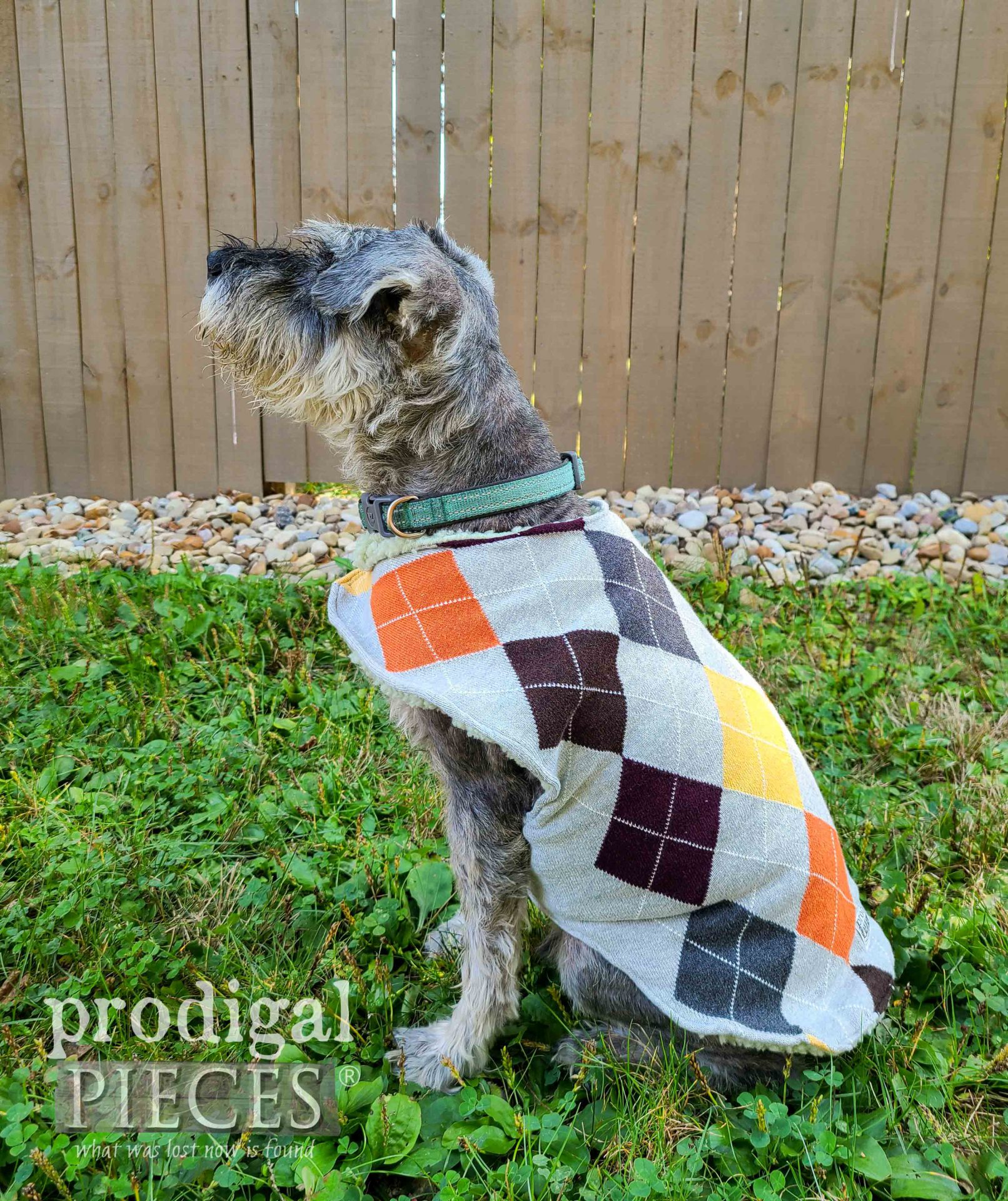 Mini Schnauzer Dog Coat from Upcycled Sweaters by Larissa of Prodigal Pieces | prodigalpieces.com #prodigalpieces #diy #pets #dogs #handmade
