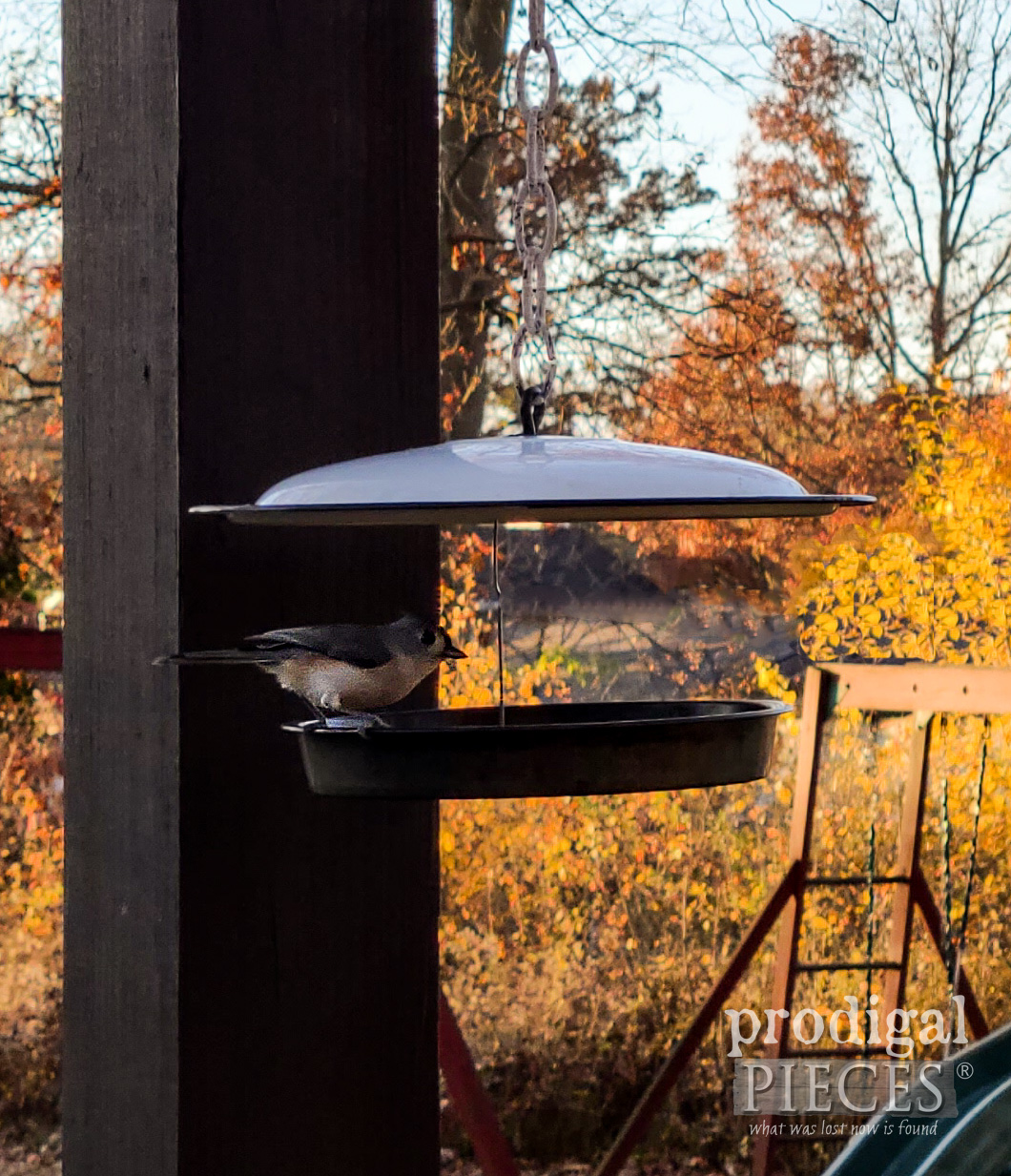 Nuthatch Bird Feeding at Repurposed Bird Feeder by Larissa of Prodigal Pieces | prodigalpieces.com #prodigalpieces #garden #home #homedecor