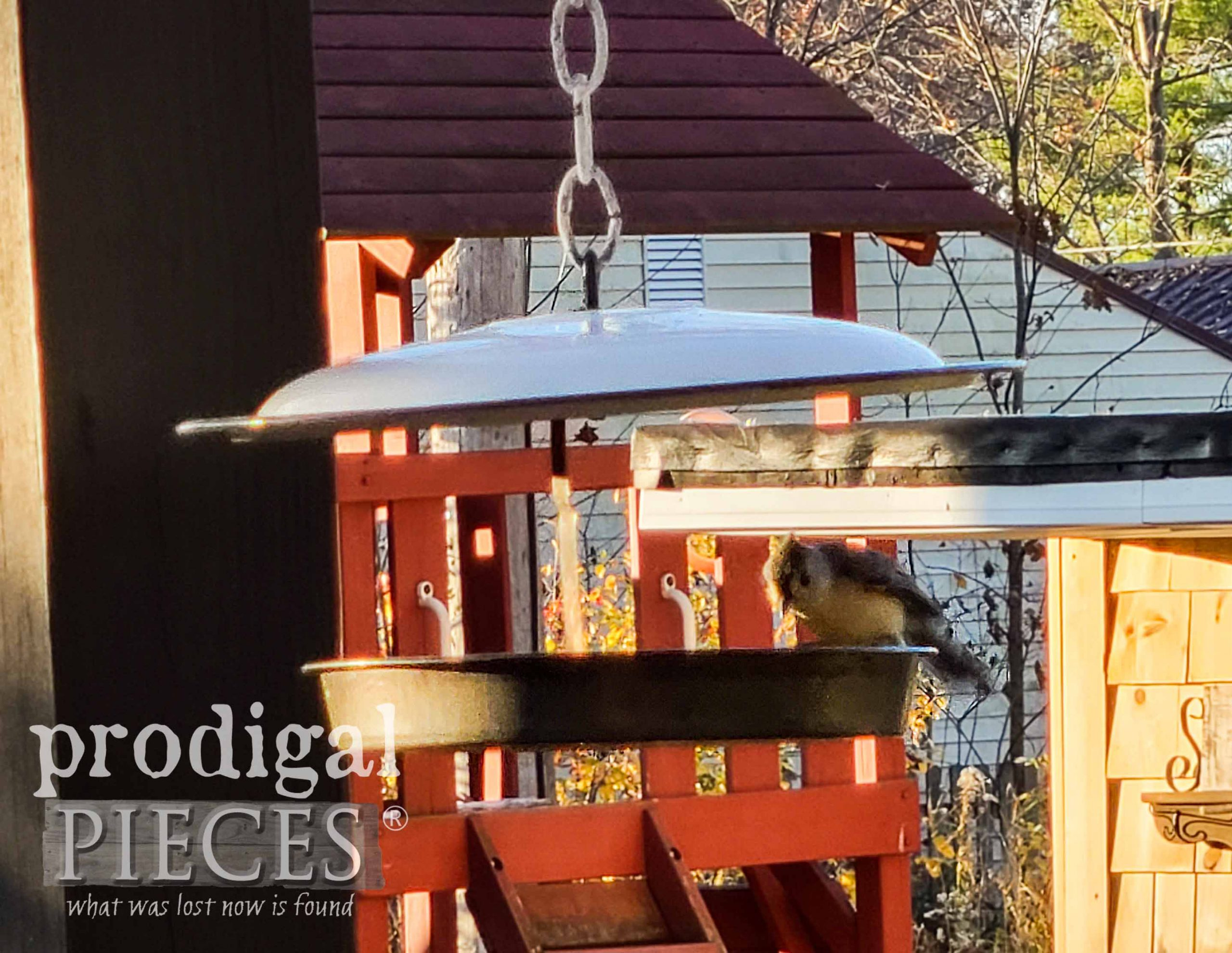 Upcycled Bird Feeder with Nuthatch by Larissa of Prodigal Pieces | prodigalpieces.com #prodigalpieces #garden #farmhouse #birds