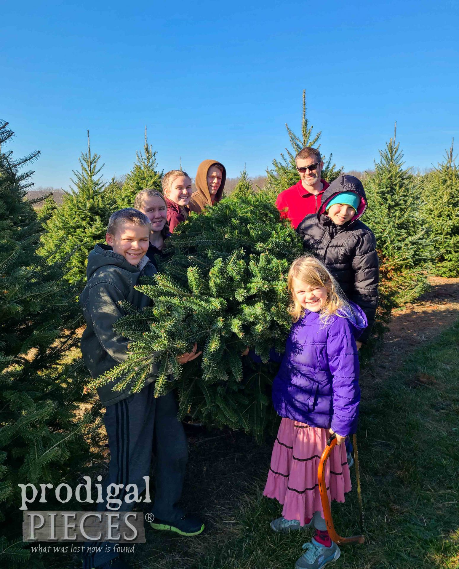 Getting Fresh Christmas Tree | prodigalpieces.com #prodigalpieces