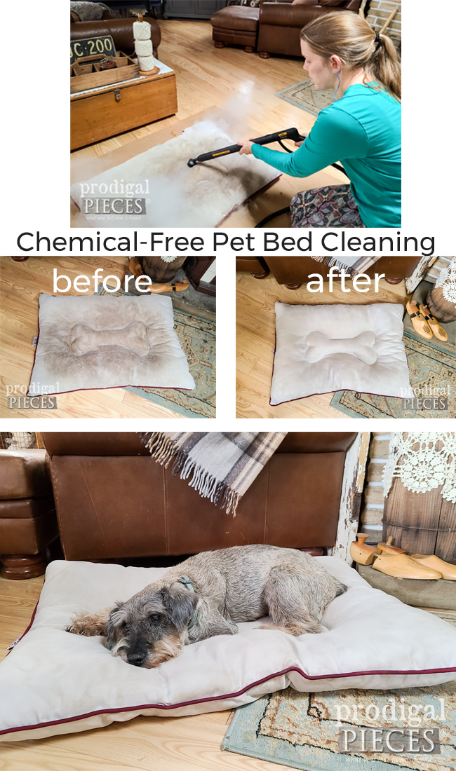 Give your pets the best! A chemical-free pet bed cleaning means and healthy, happy home. Details at Prodigal Pieces | prodigalpieces.com #prodigalpieces #pets #diy #healthy #home