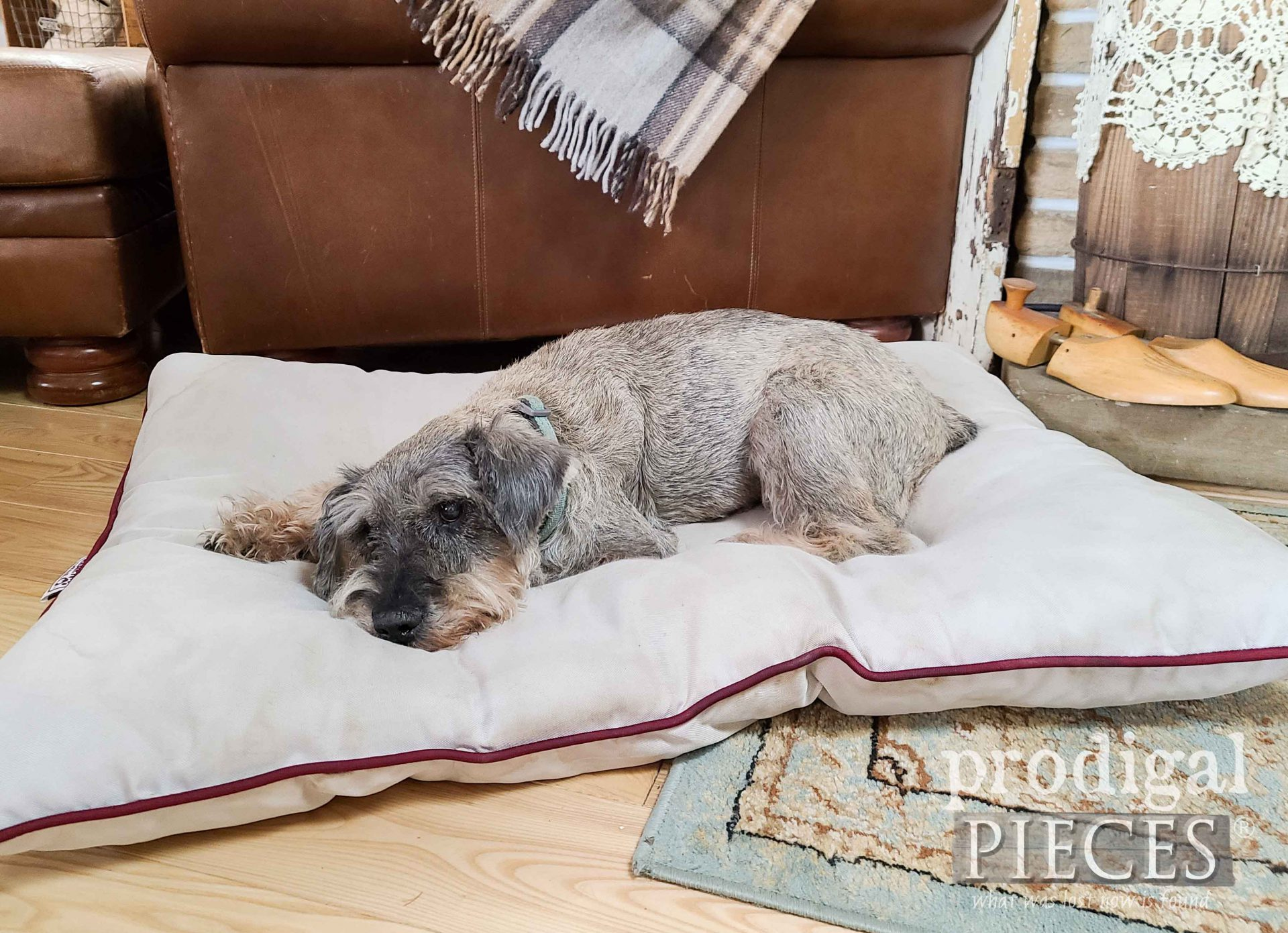 Sleeping Dog on Pet Bed by Larissa of Prodigal Pieces | prodigalpieces.com #prodigalpieces #dog