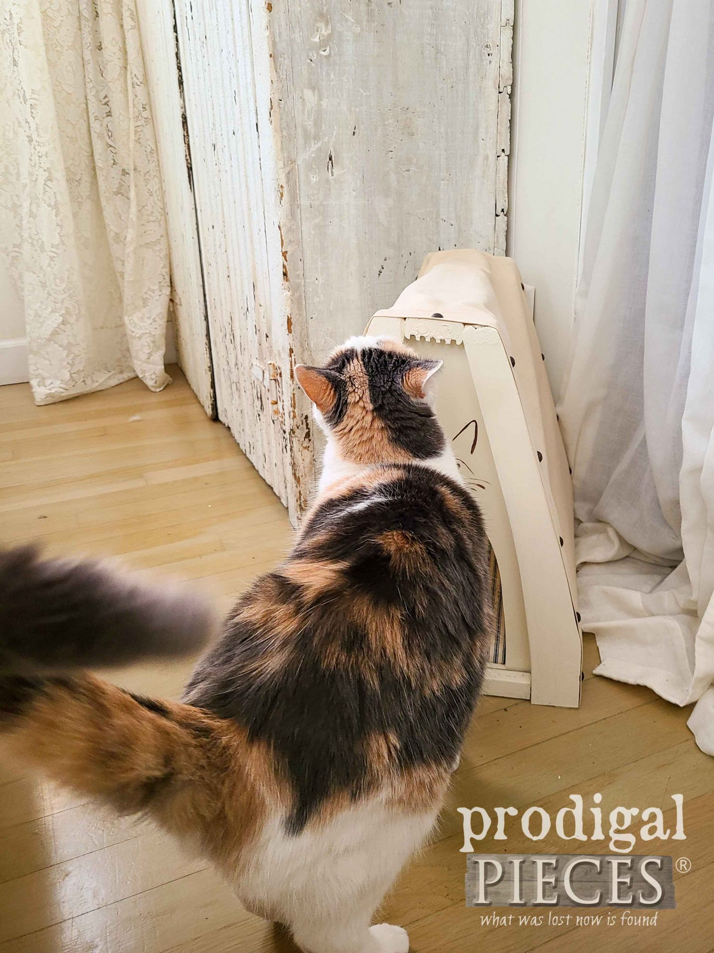 Funny Calico Cat Checkout Out Cat Cave by Larissa of Prodigal Pieces | prodigalpieces.com #prodigalpieces #cats