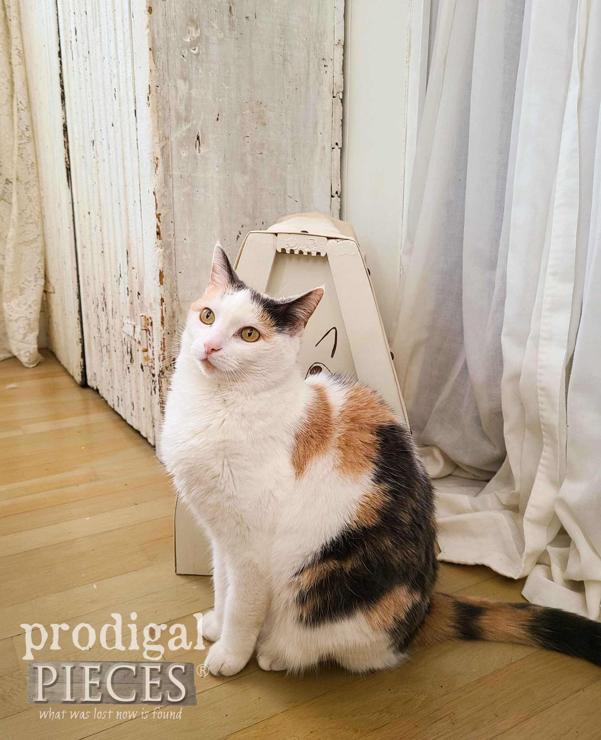 Lily the Calico Cat with Cat Bed from Upcycled Chair by Larissa of Prodigal Pieces | prodigalpieces.com #prodigalpieces #diy #upcycled