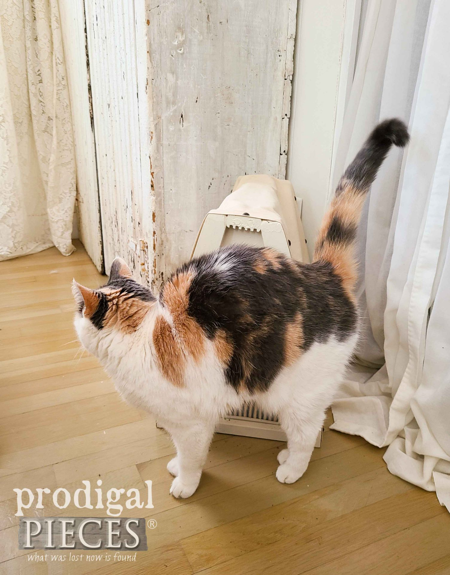 Silly Kitty with Cat Cave by Larissa of Prodigal Pieces | prodigalpieces.com #prodigalpieces #pets