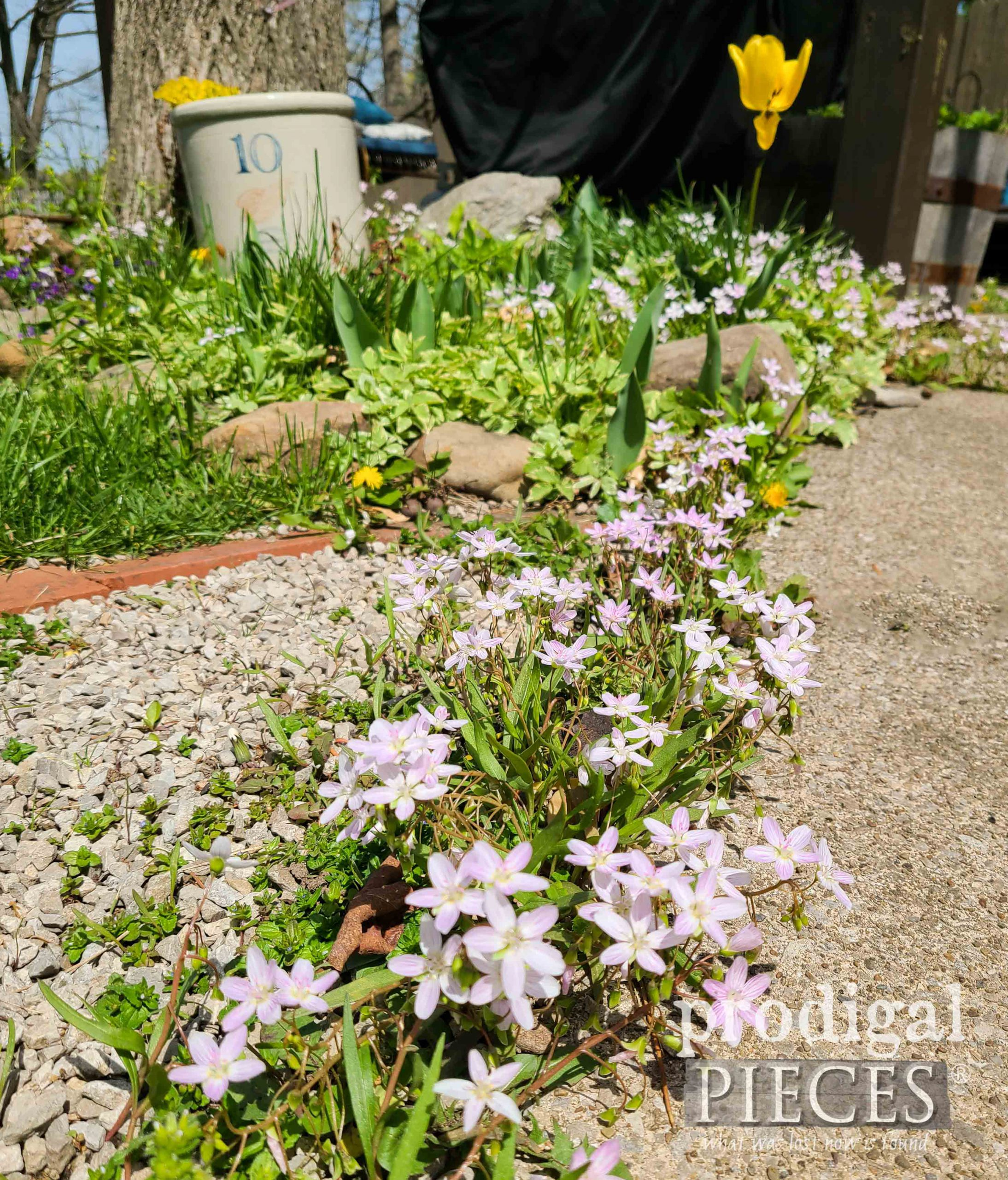 Tiny Pink Spring Beauty Flowers in Garden | Waiting on the Lord by Prodigal Pieces | prodigalpieces.com #prodigalpieces #flowers #garden