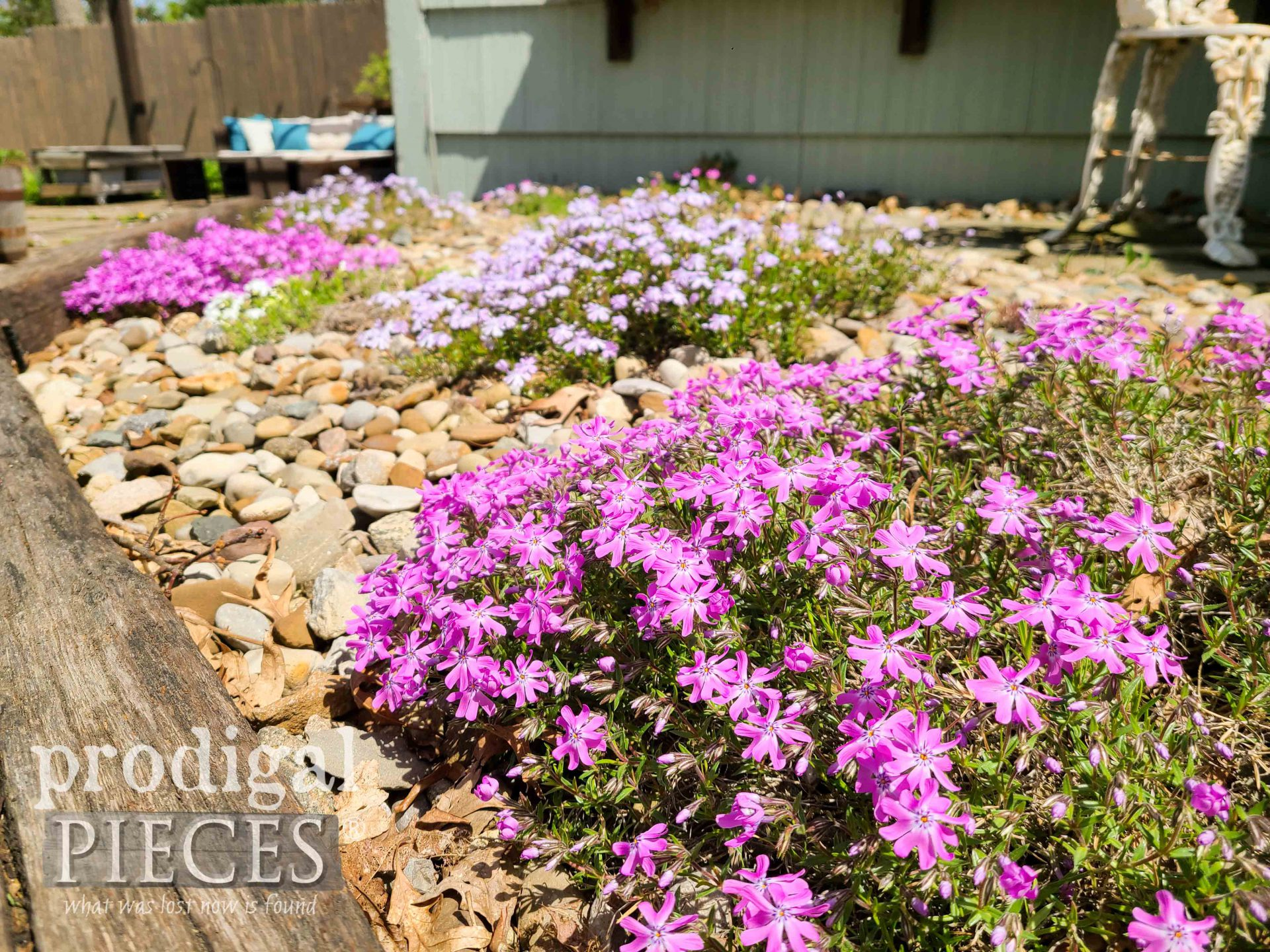 Beautiful Spring Creeping Phlox by Prodigal Pieces | prodigalpieces.com #prodigalpieces #gardening #flowers